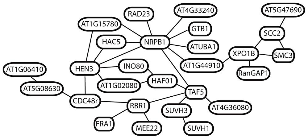 Predicted interactions among 27 putatively selected genes in <i>A. arenosa</i>.