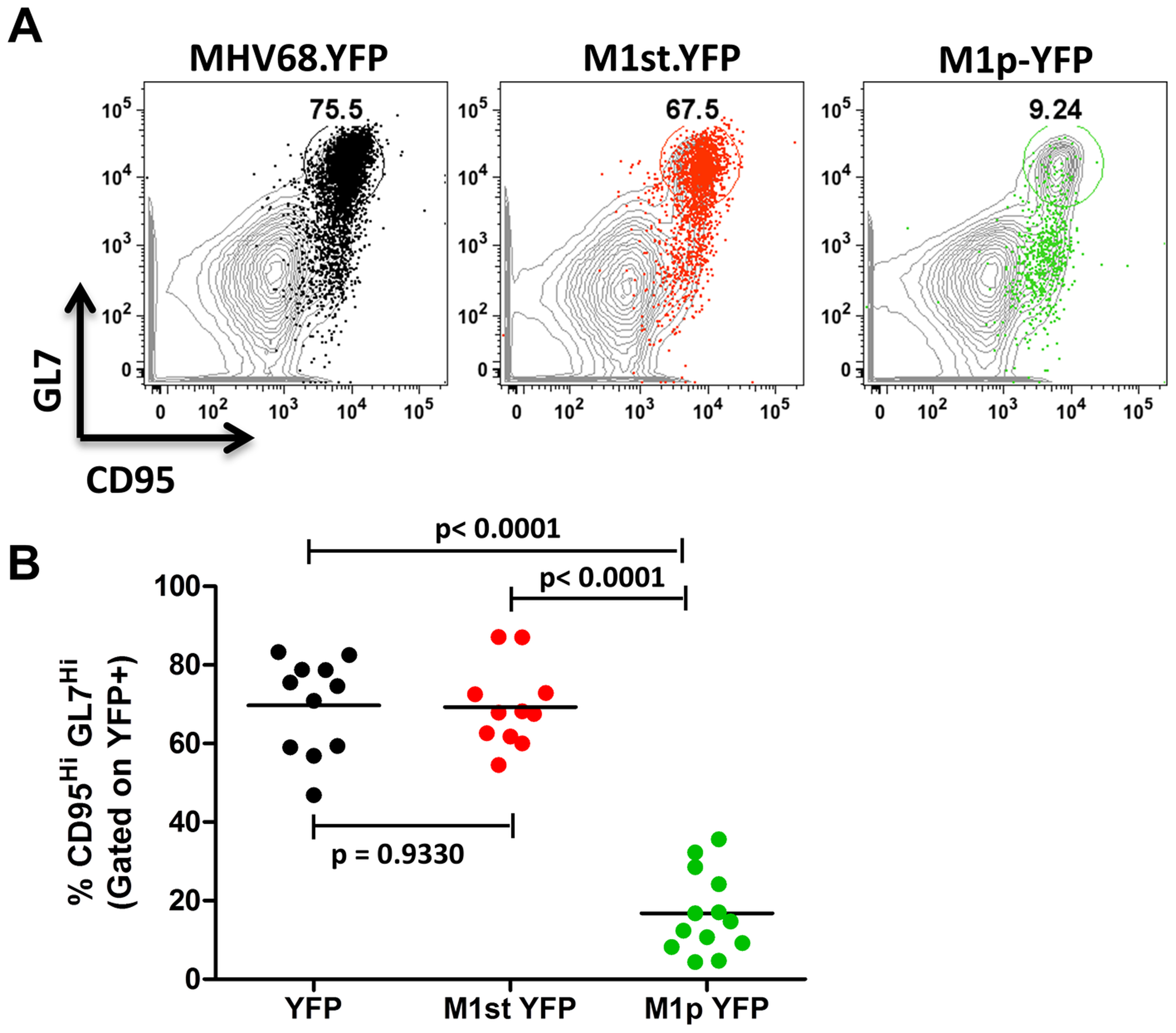 Low levels of M1 promoter activity are detected in germinal center B cells.