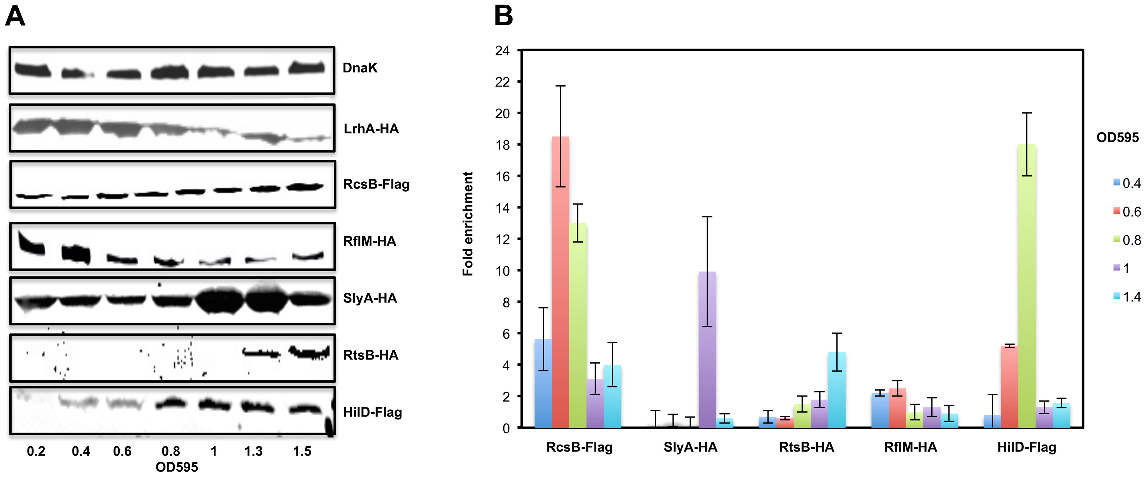 The expression levels and the in-vivo binding of regulatory factors controlling <i>flhDC</i> operon transcription during cell growth phases.
