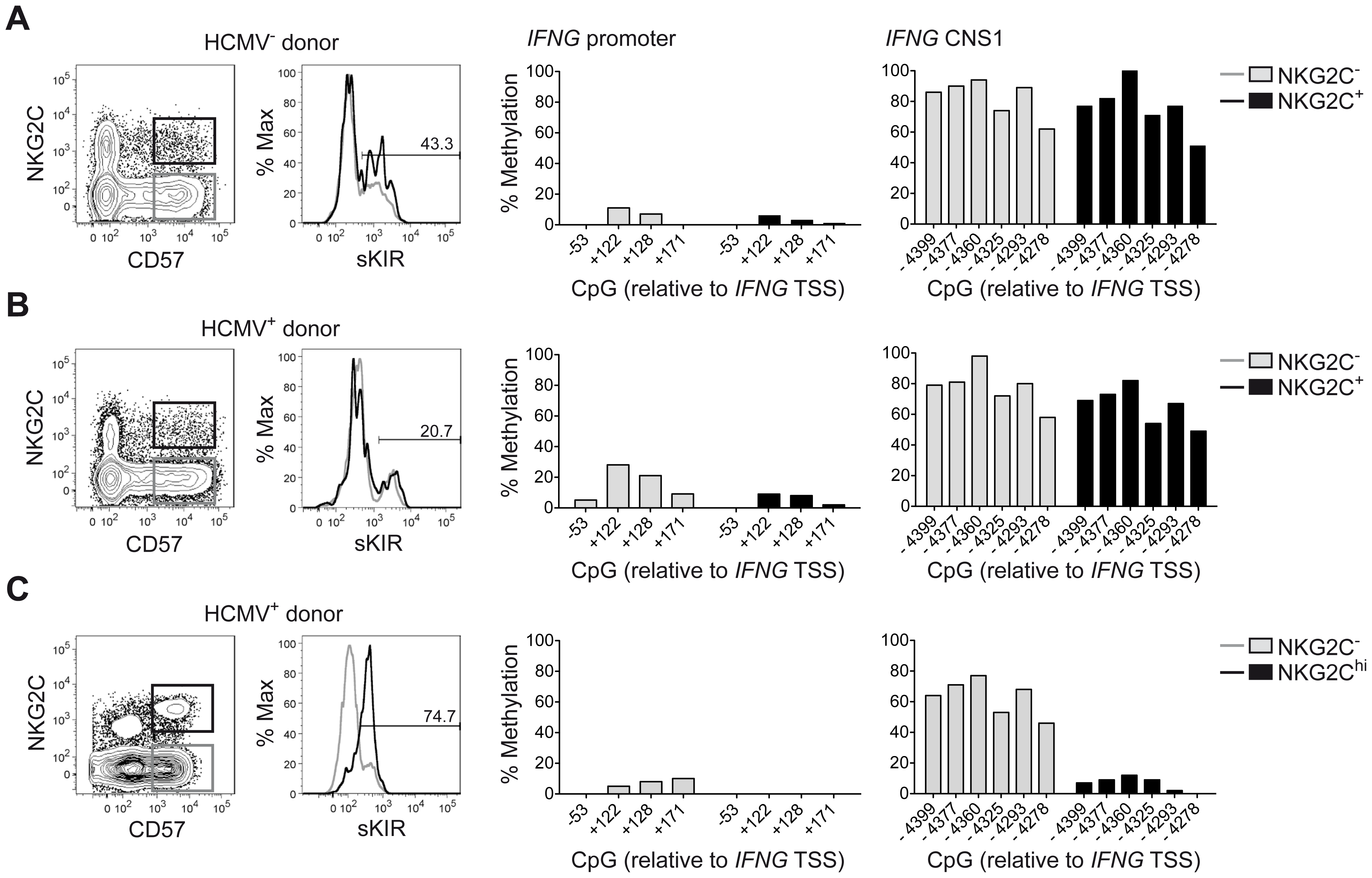 Expanded NKG2C<sup>hi</sup> NK cells display complete demethylation of the <i>IFNG</i> CNS1.