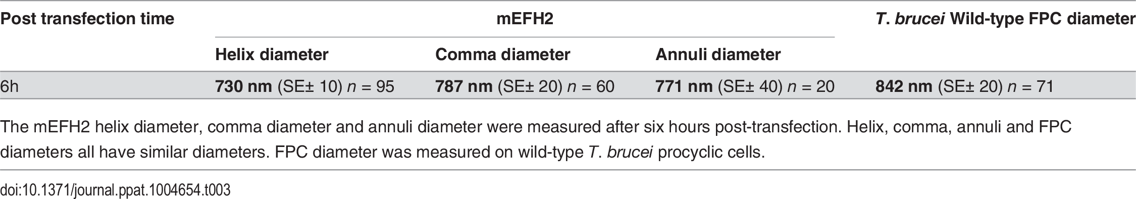 Mean mEFH2-induced helix, coma and annuli diameter after expression in U-2 OS cells and mean FPC diameter.