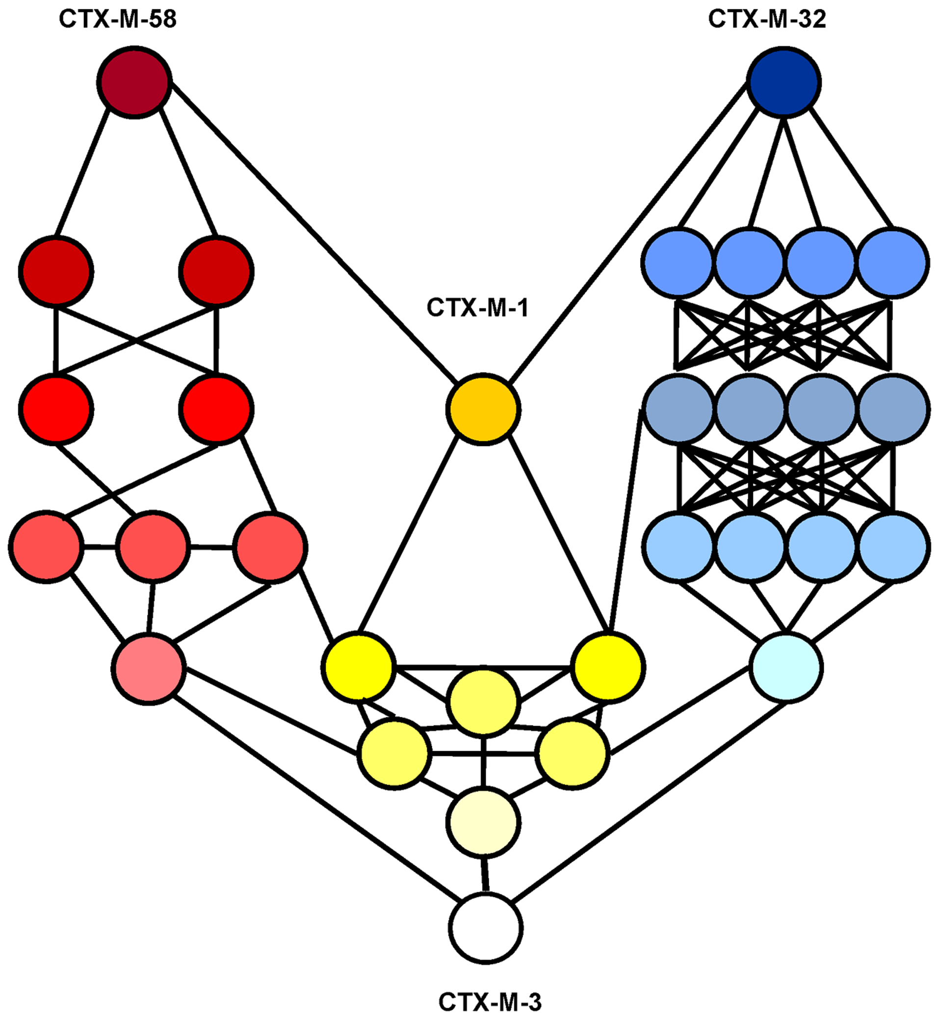 Interconnectedness of three CTX-M-3 diversification routes.
