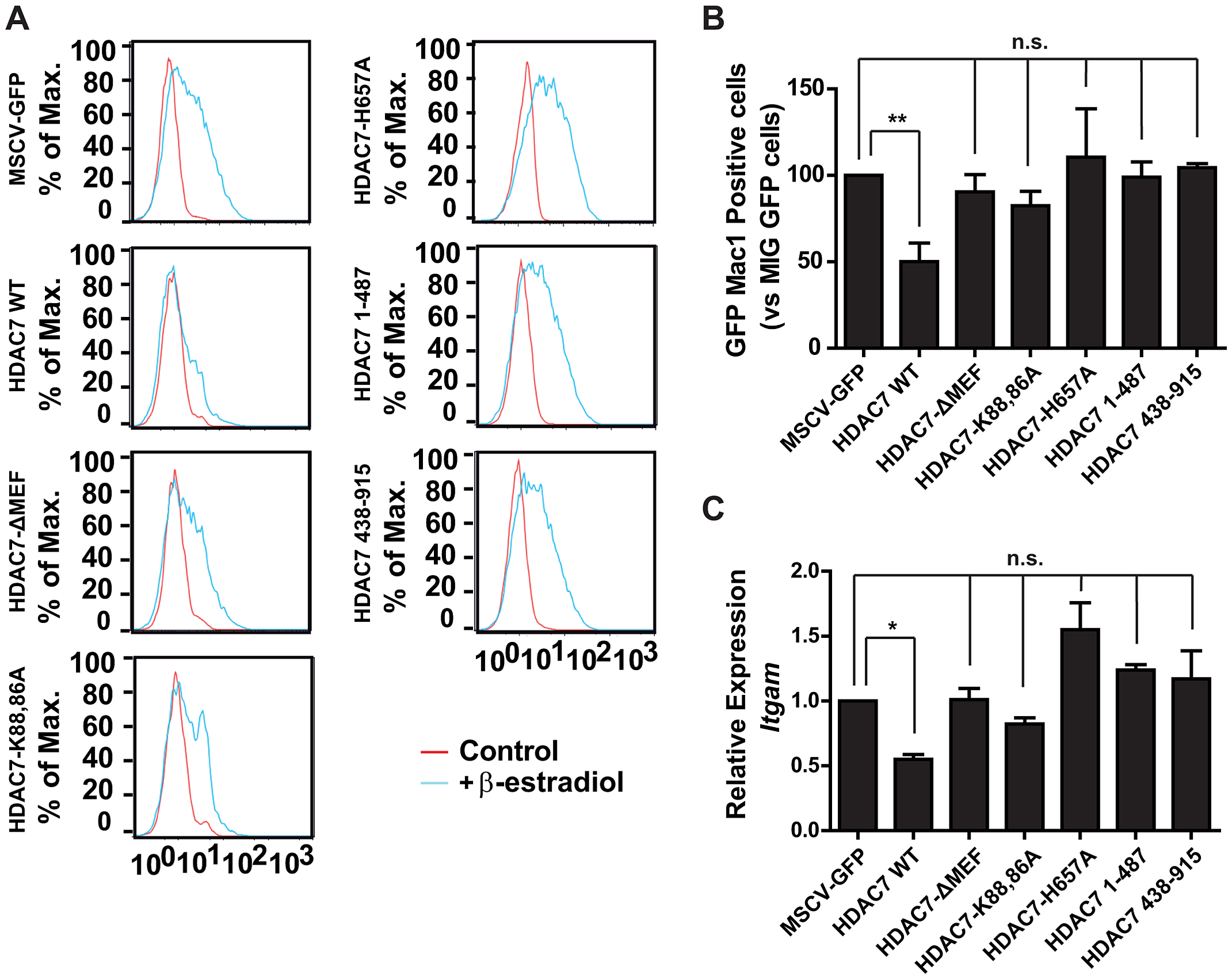 Interaction of HDAC7 with MEF2C and its catalytic activity are essential for repression of Mac-1.