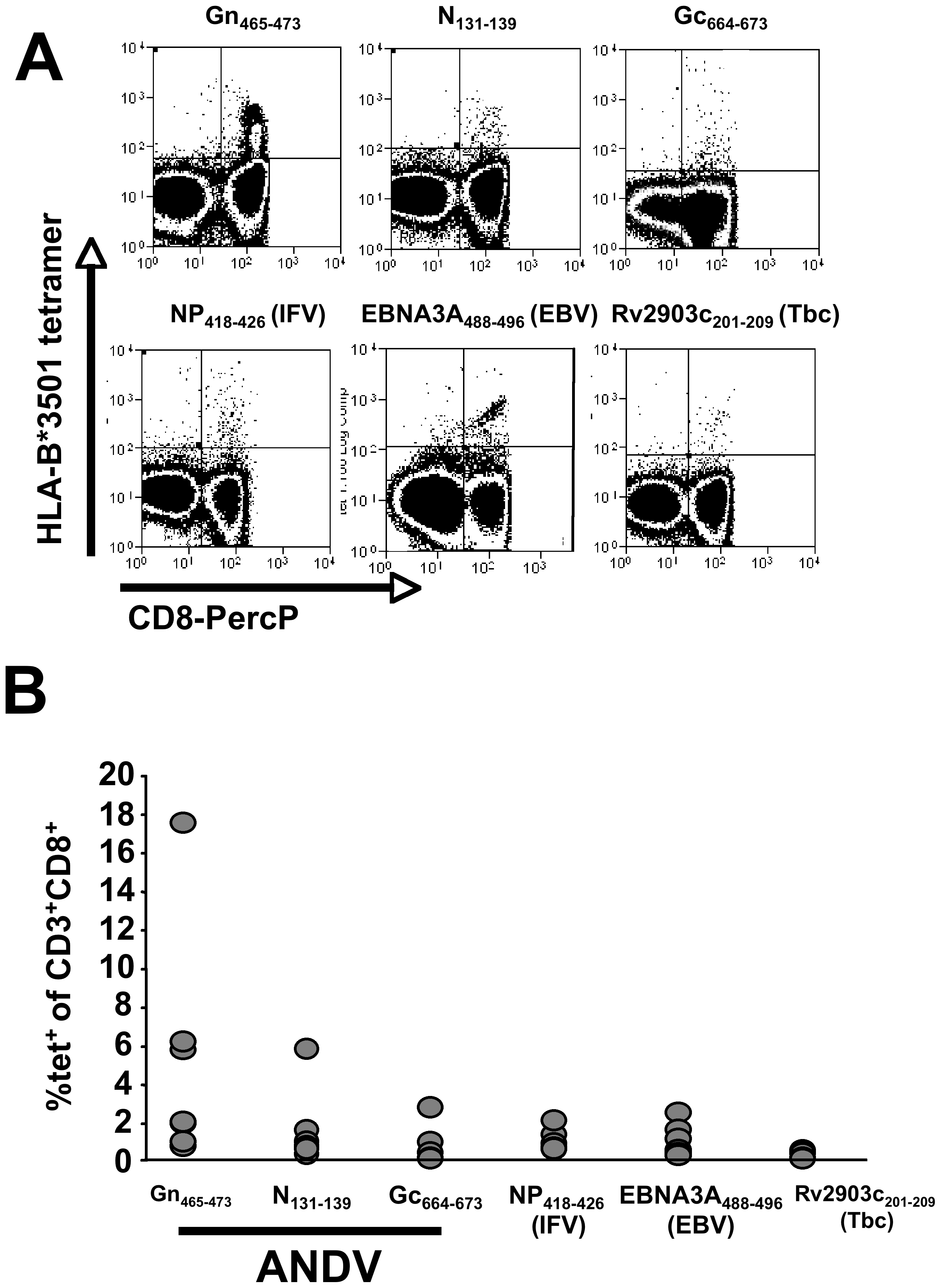Tetramer analysis of pathogen specific CD8+ memory T cells in seven HLA-B*3501<sup>+</sup> individuals.
