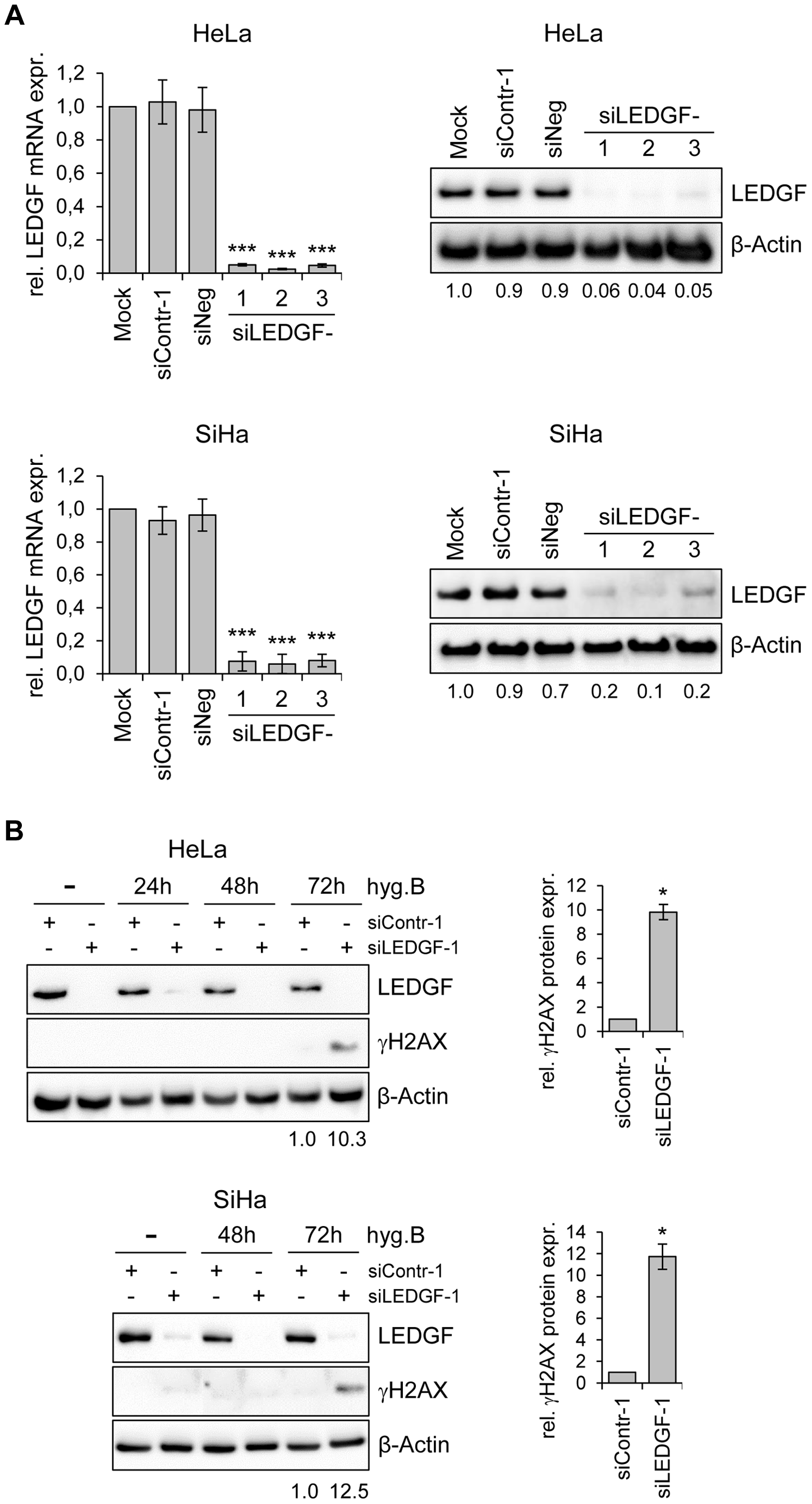 Silencing of <i>LEDGF</i> expression by synthetic siRNAs increases hygromycin B-induced genotoxicity in HPV-positive cancer cells.