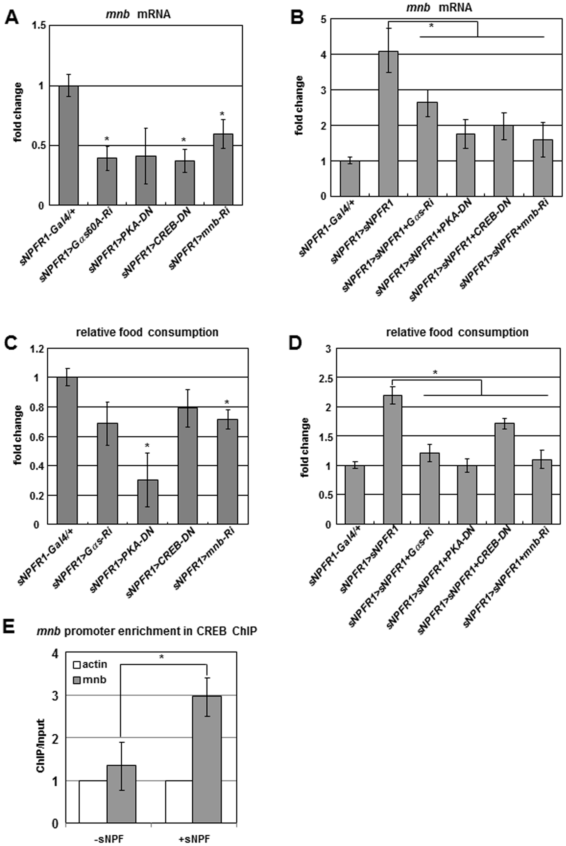 Genetic interactions among <i>sNPFR1</i>, <i>Gαs</i>, <i>PKA</i>, <i>CREB</i>, and <i>mnb</i> genes and CREB ChIP–PCR analysis.
