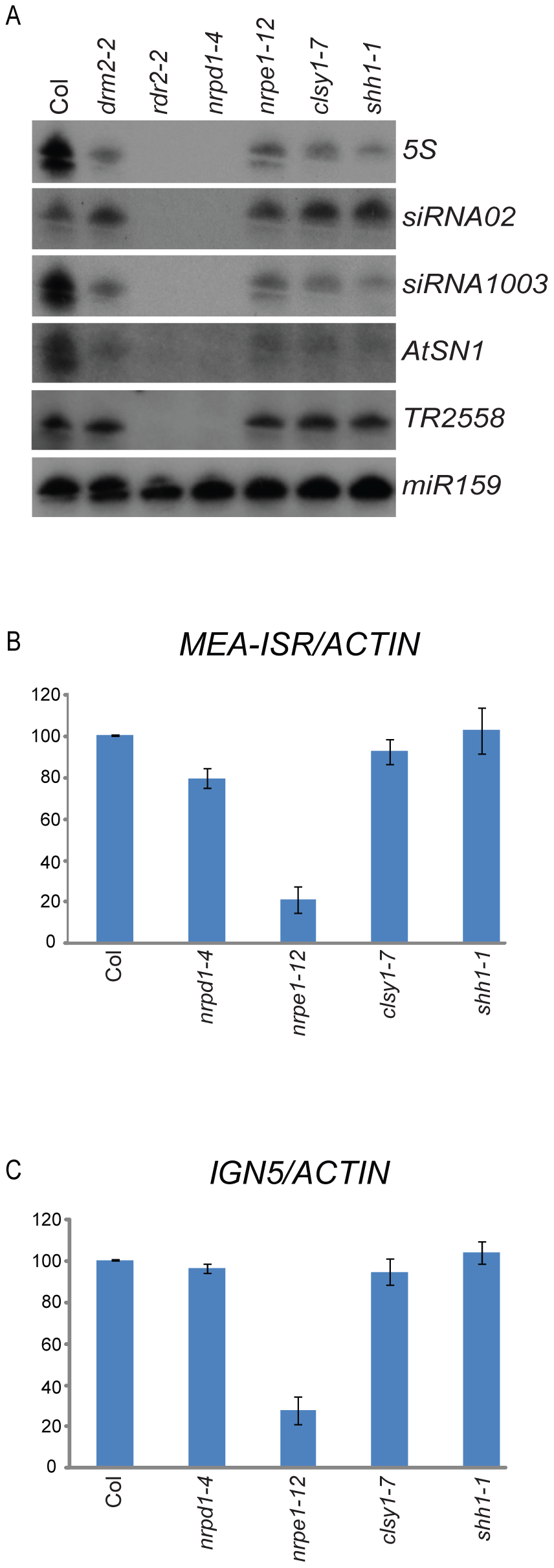 Characterization of siRNAs and Pol-V dependent transcripts in the <i>shh1</i> mutant.