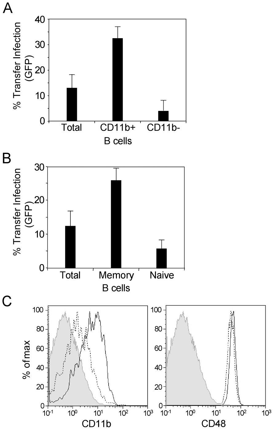 Transfer infection via the basolateral surface is mediated via memory B cells.