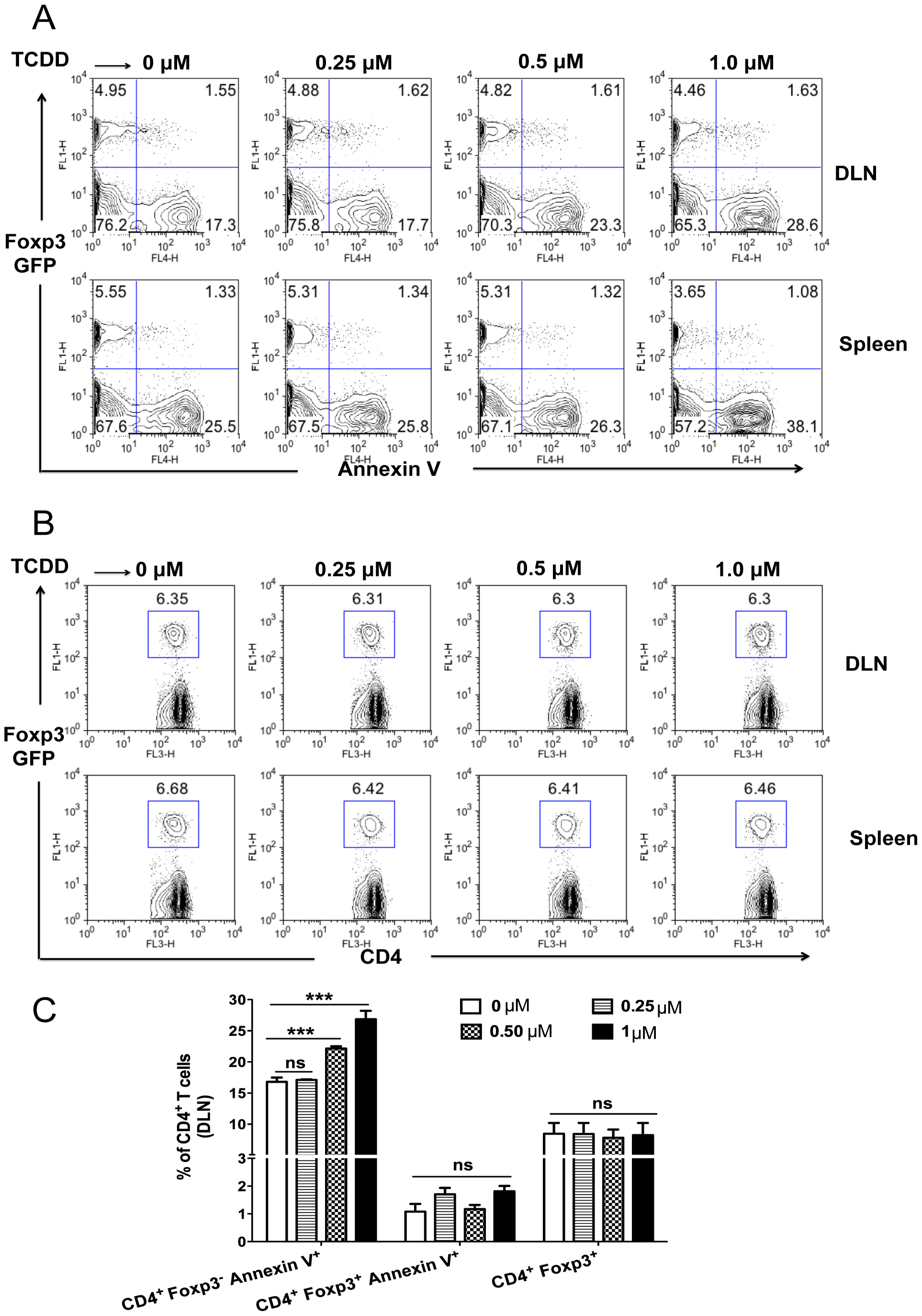 TCDD causes apoptosis of Foxp3<sup>-</sup>CD4<sup>+</sup> T cells but not Tregs.