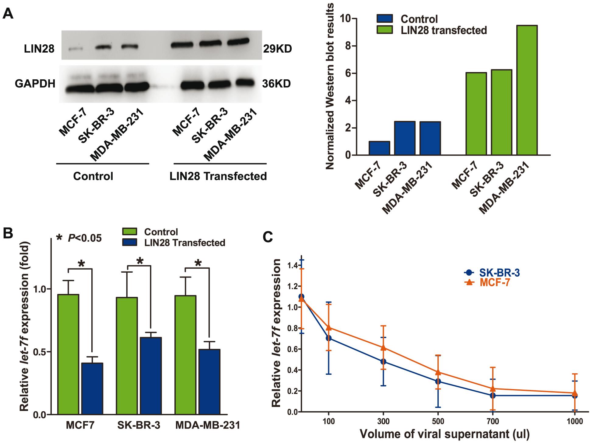 LIN28 represses <i>let-7</i> in the molecular context of breast cancer.