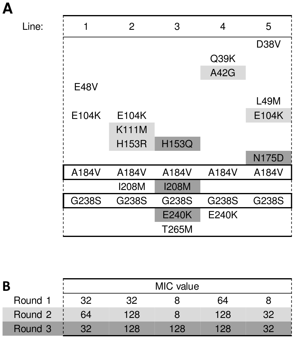 Amino acid substitutions in evolved TEM double-mutant A184V/G238S.