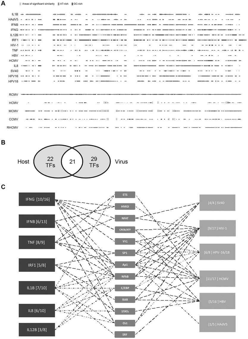 Comparison of host innate-immune and viral regulatory regions.