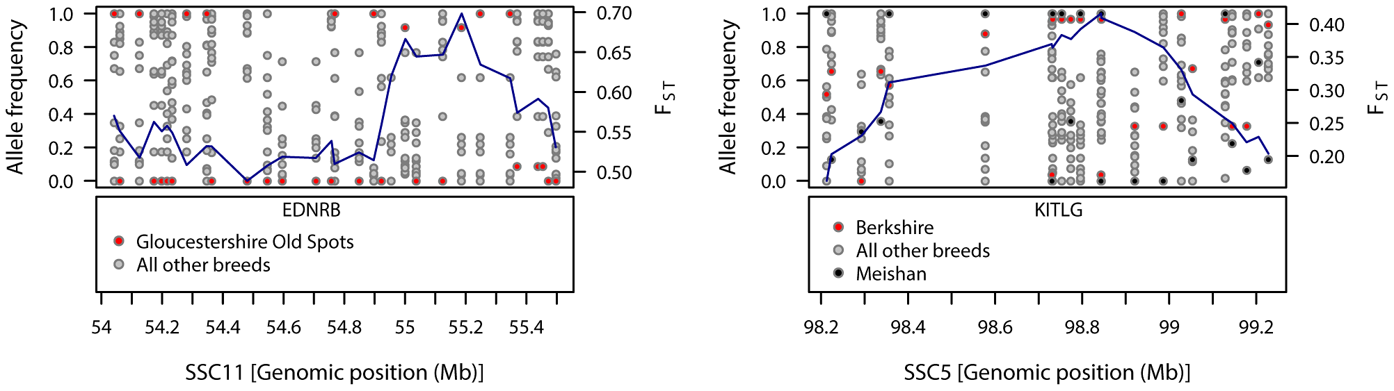 Patterns of genetic variation within regions showing strong signals of diversifying selection in Gloucestershire Old Spots (SSC11) and Berkshire (SSC5).