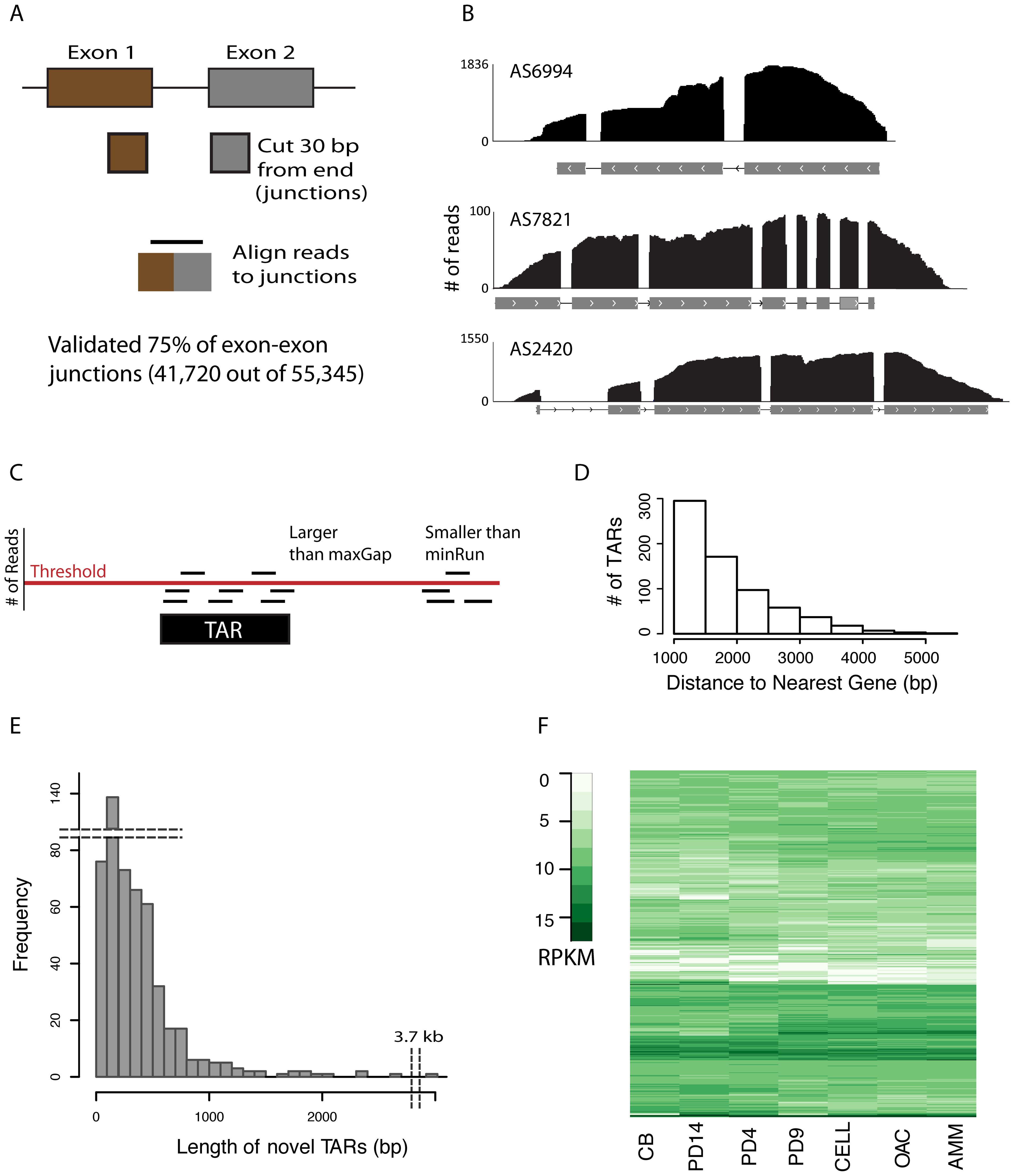 Validating gene models and novel TARs.