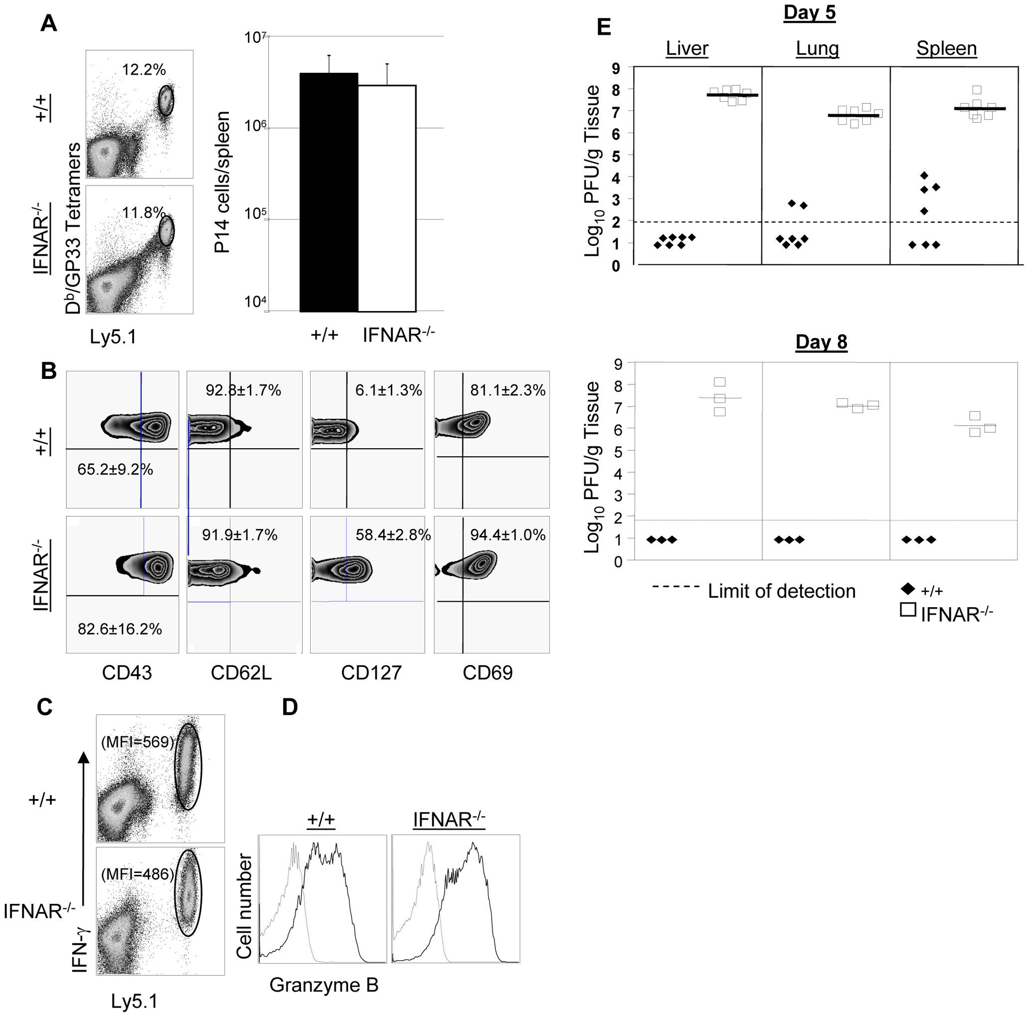 Expansion of TCR tg P14 memory CD8<sup>+</sup> T cells and viral control in IFNAR<sup>−/−</sup> mice.