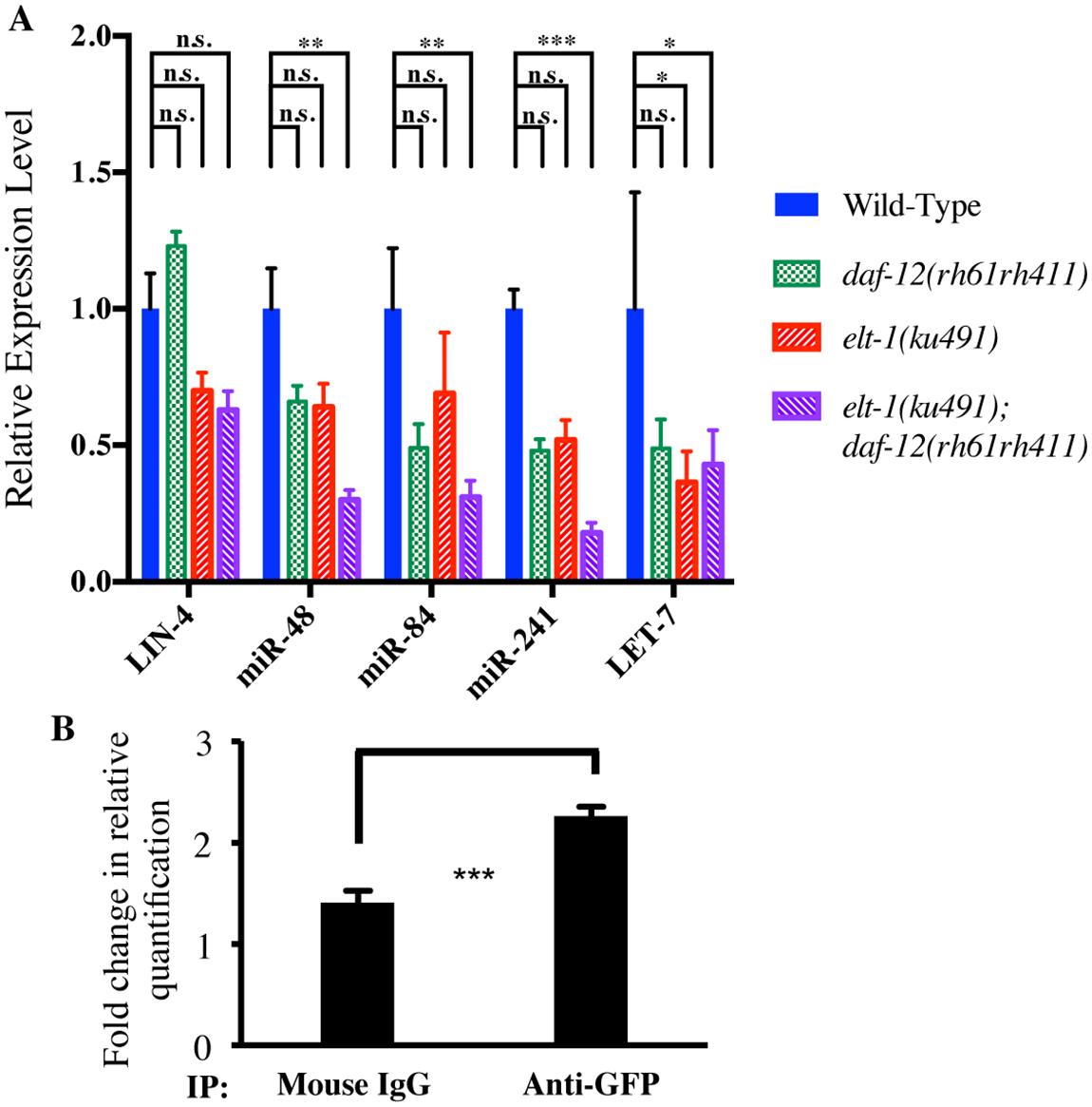 LET-7 family miRNAs are decreased in <i>elt-1(ku491);daf-12(rh61rh411)</i> double-mutant animals and ELT-1 binds to the <i>let-7</i> promoter <i>in vivo</i>.