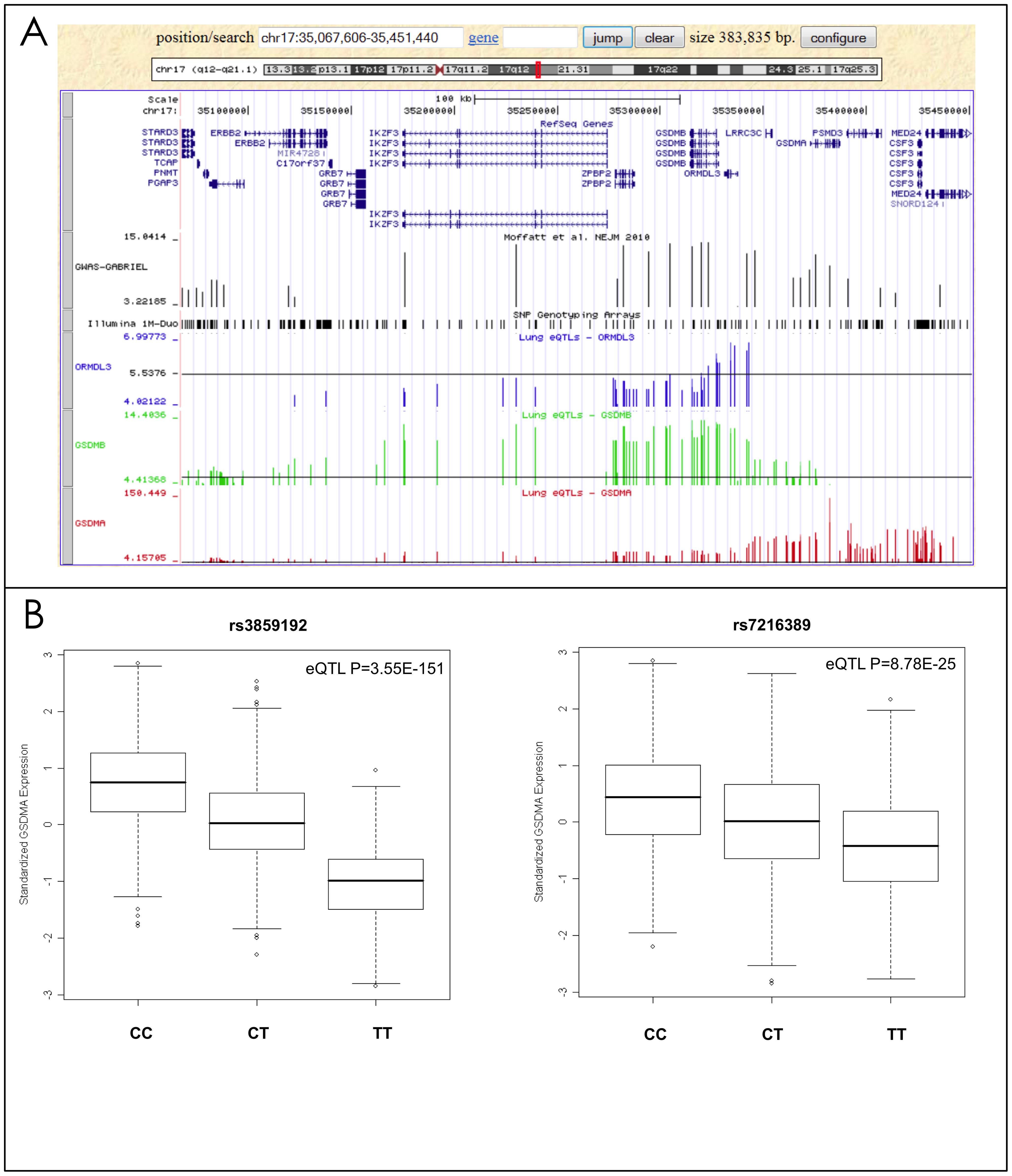 Lung eQTLs found on chromosome 17q21.