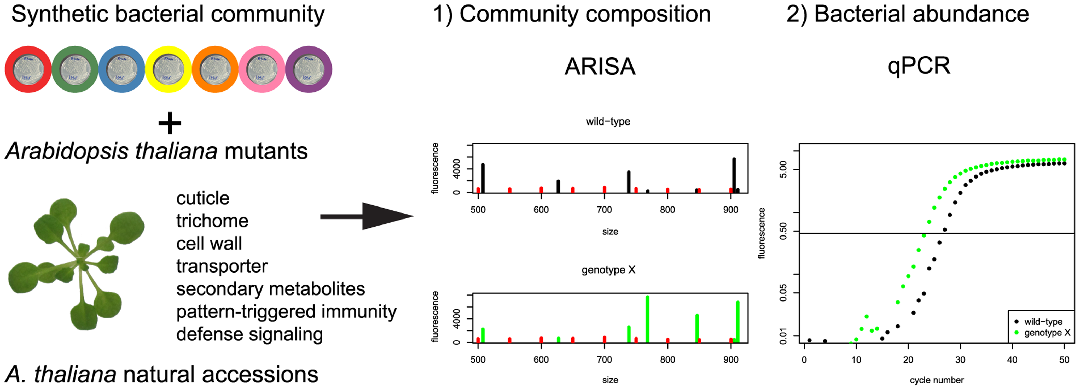 Experimental strategy to identify the plant genes responsible for changes in community composition and/or total bacterial abundance.
