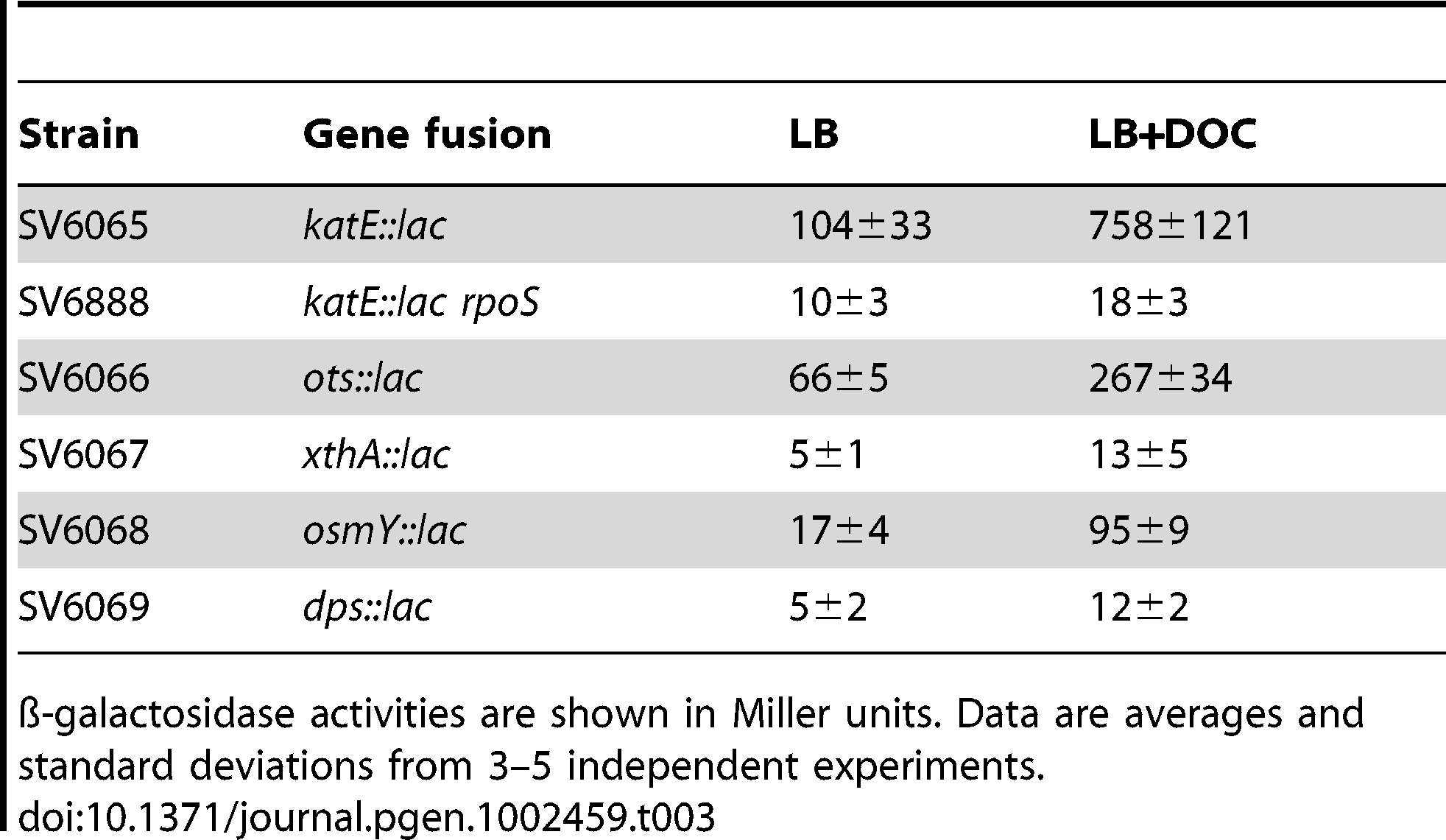 ß-galactosidase activities of <i>lac</i> fusions in RpoS-regulated genes in the presence and in the absence of 5% sodium deoxycholate during exponential growth.