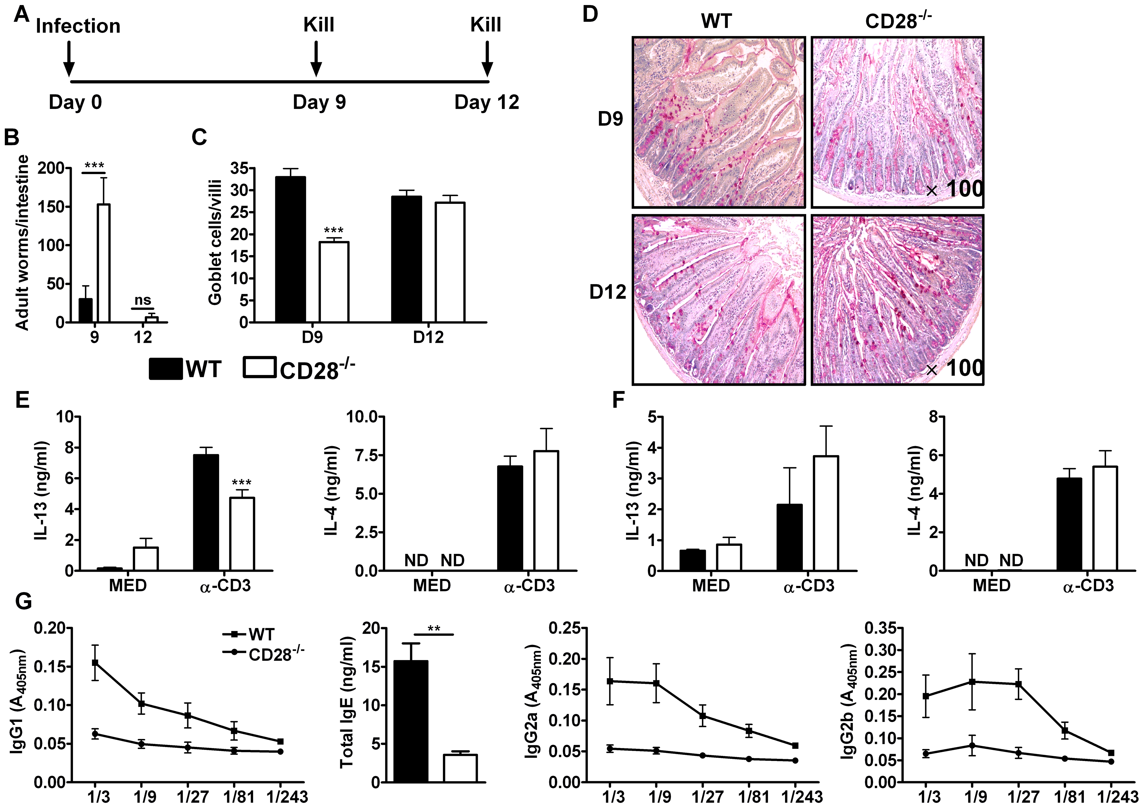 Delayed worm expulsion in CD28 deficient mice during primary <i>N. brasiliensis</i> infection.