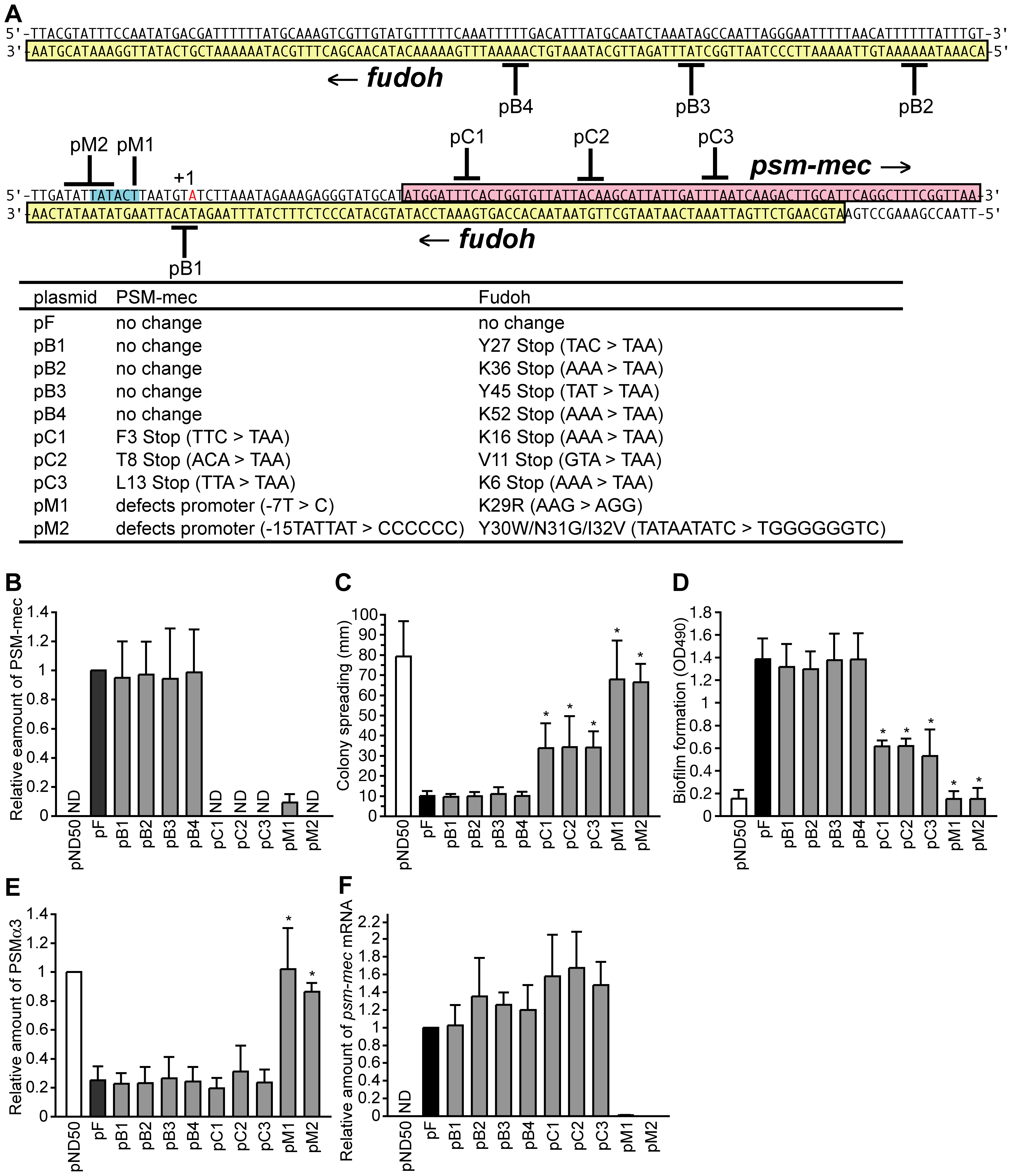 Analysis of nucleotide substitutions in the F region.