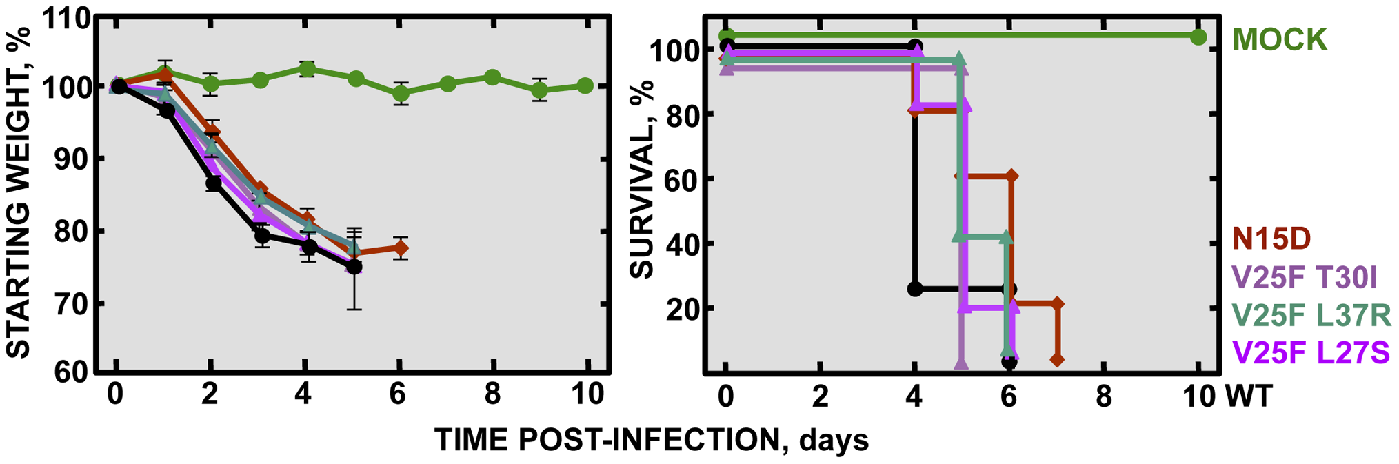 Pathogenesis caused by rSARS-CoV-EIC<sup>rev</sup> in BALB/c mice.