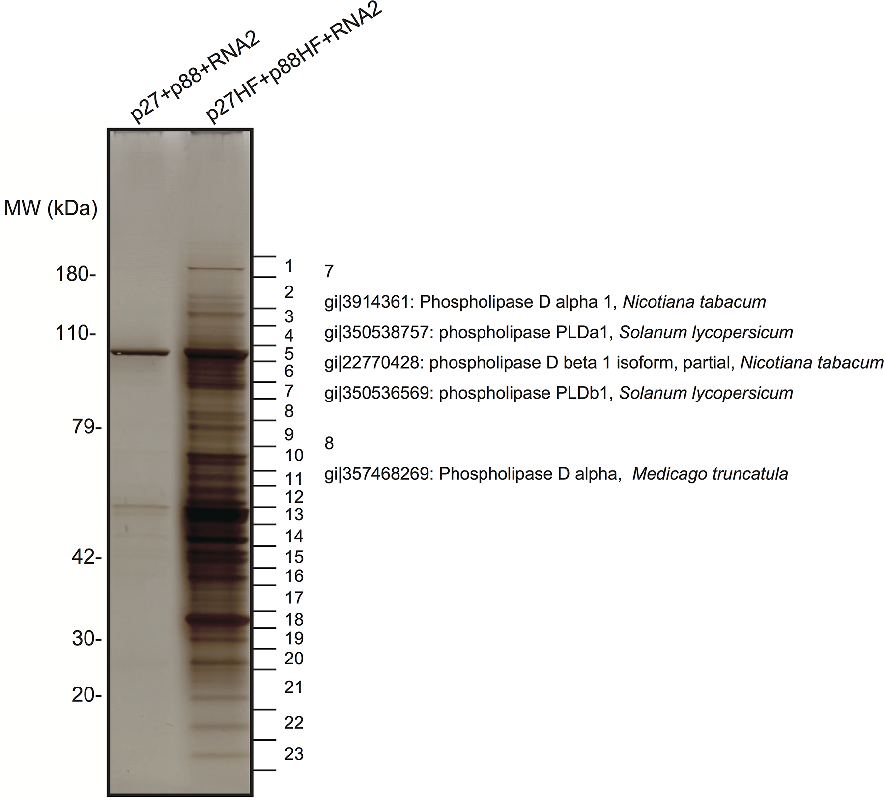 Identification of proteins copurified with RCNMV replication proteins.