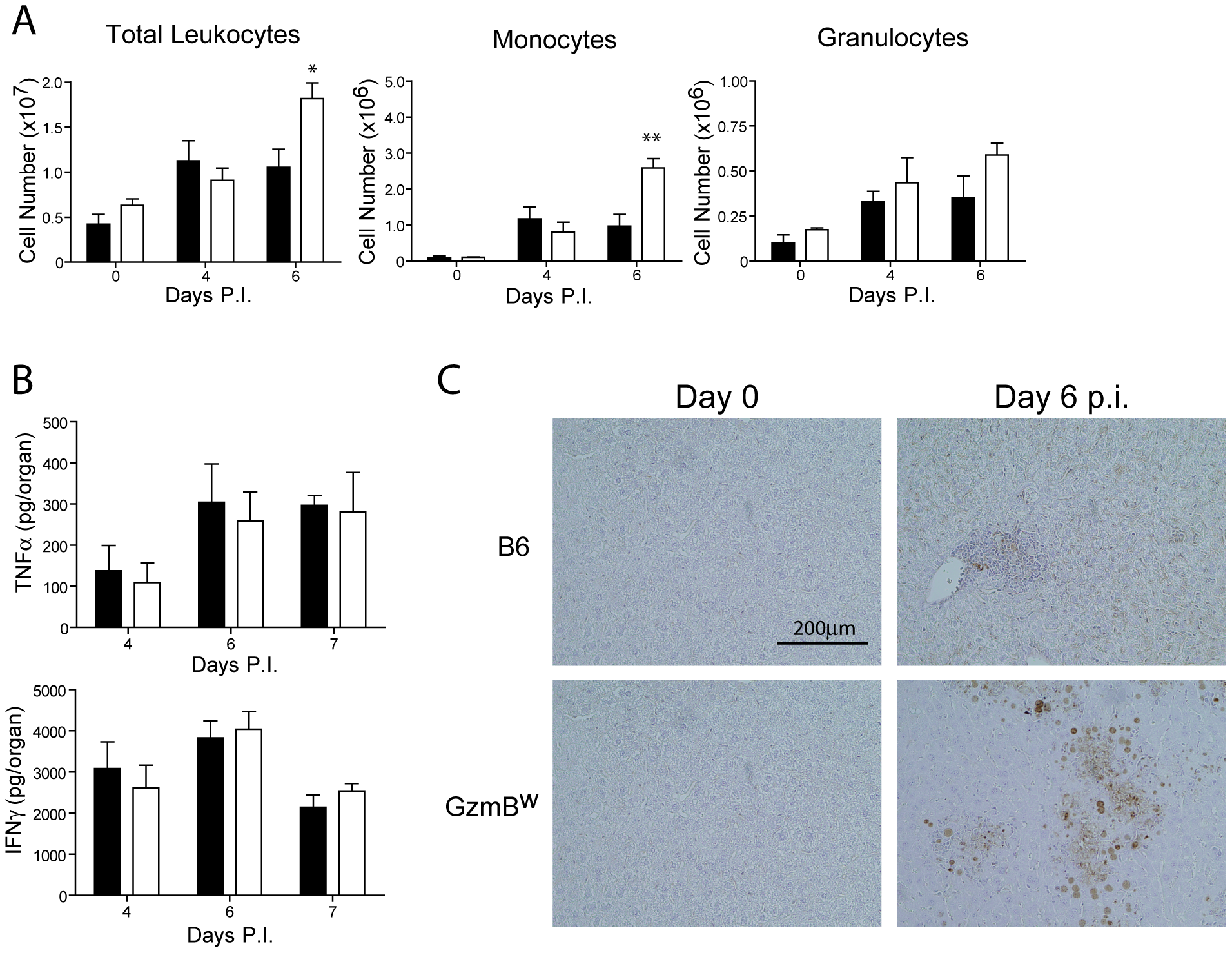 Liver damage in GzmB<sup>W/W</sup> mice is not the result of immune-mediated pathology.