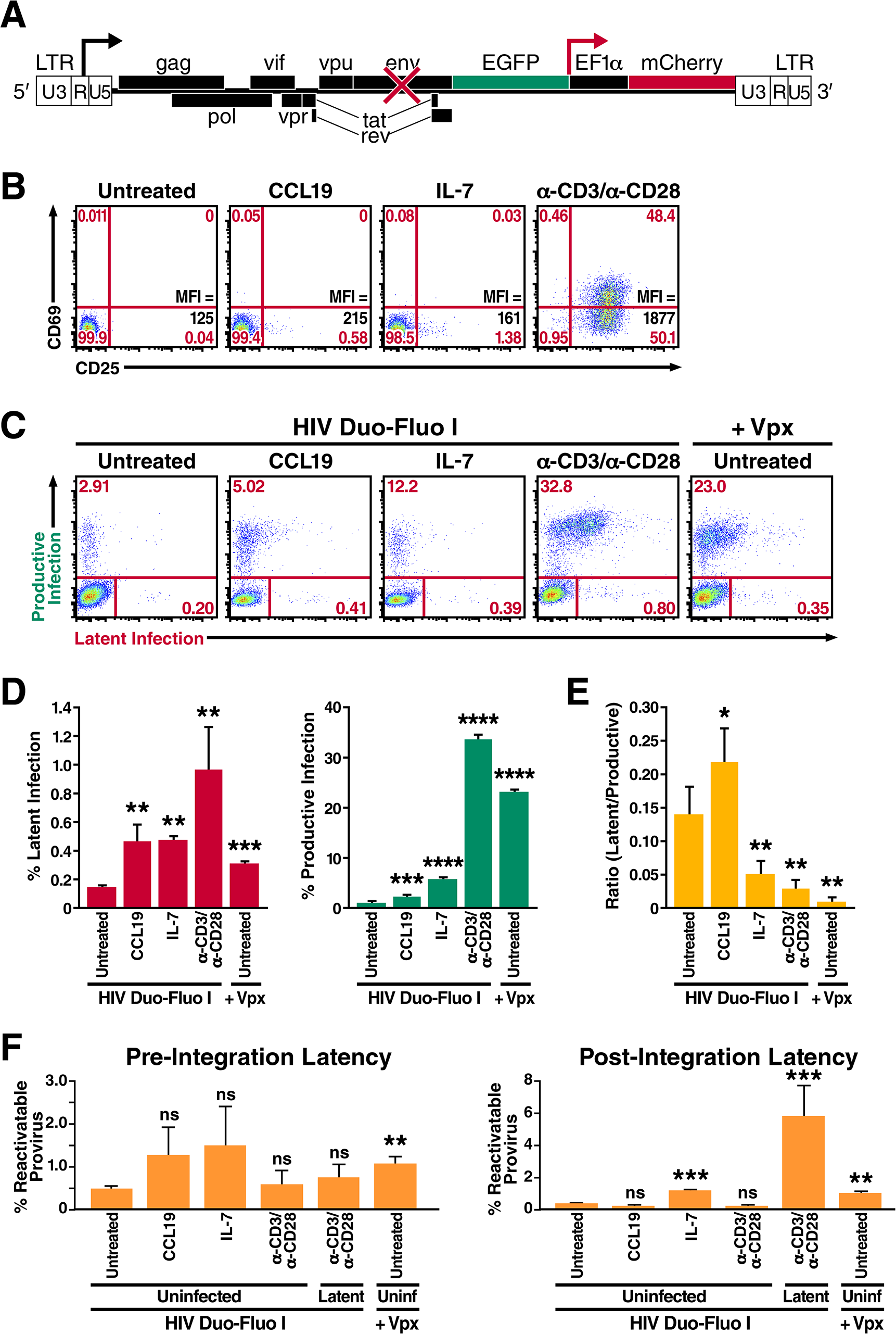 Resting primary CD4<sup>+</sup> T cells support both productive and latent HIV infection.