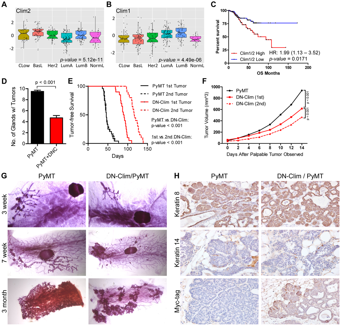 Clims promote the initiation and progression of tumors in the MMTV-PyMT breast cancer mouse model.