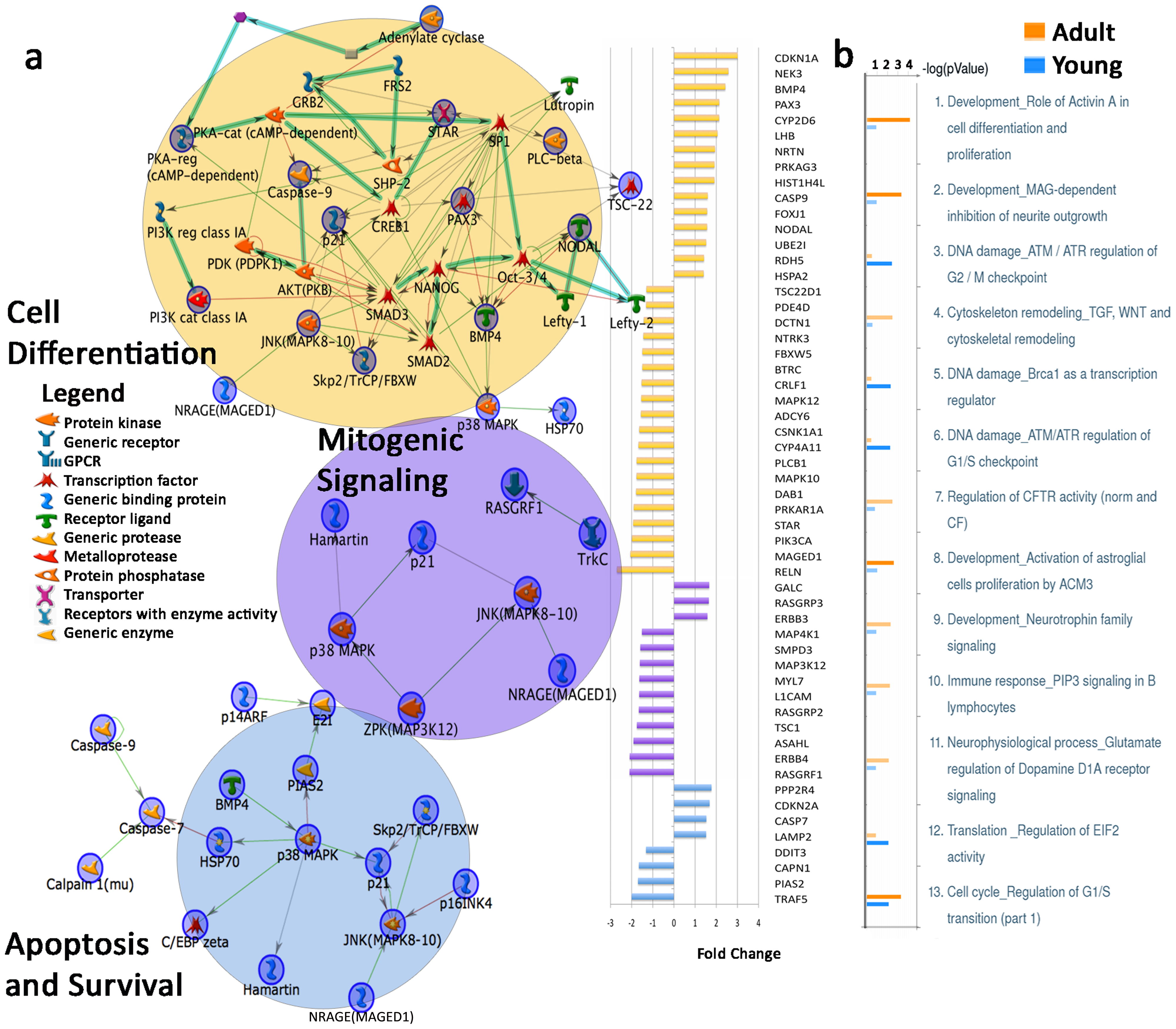 Dysregulated gene expression in top three Map Folders in adult autistic prefrontal cortex and differentially affected M-Pathways of young and adult autistic cases.