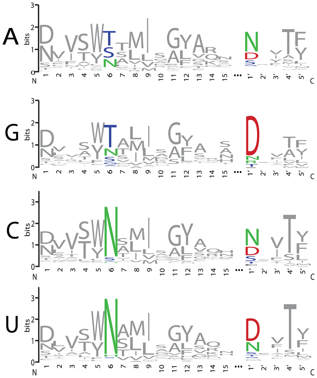 Amino Acid Representation at Each Position of PPR Motifs that Align with A, G, C, or U Bases.