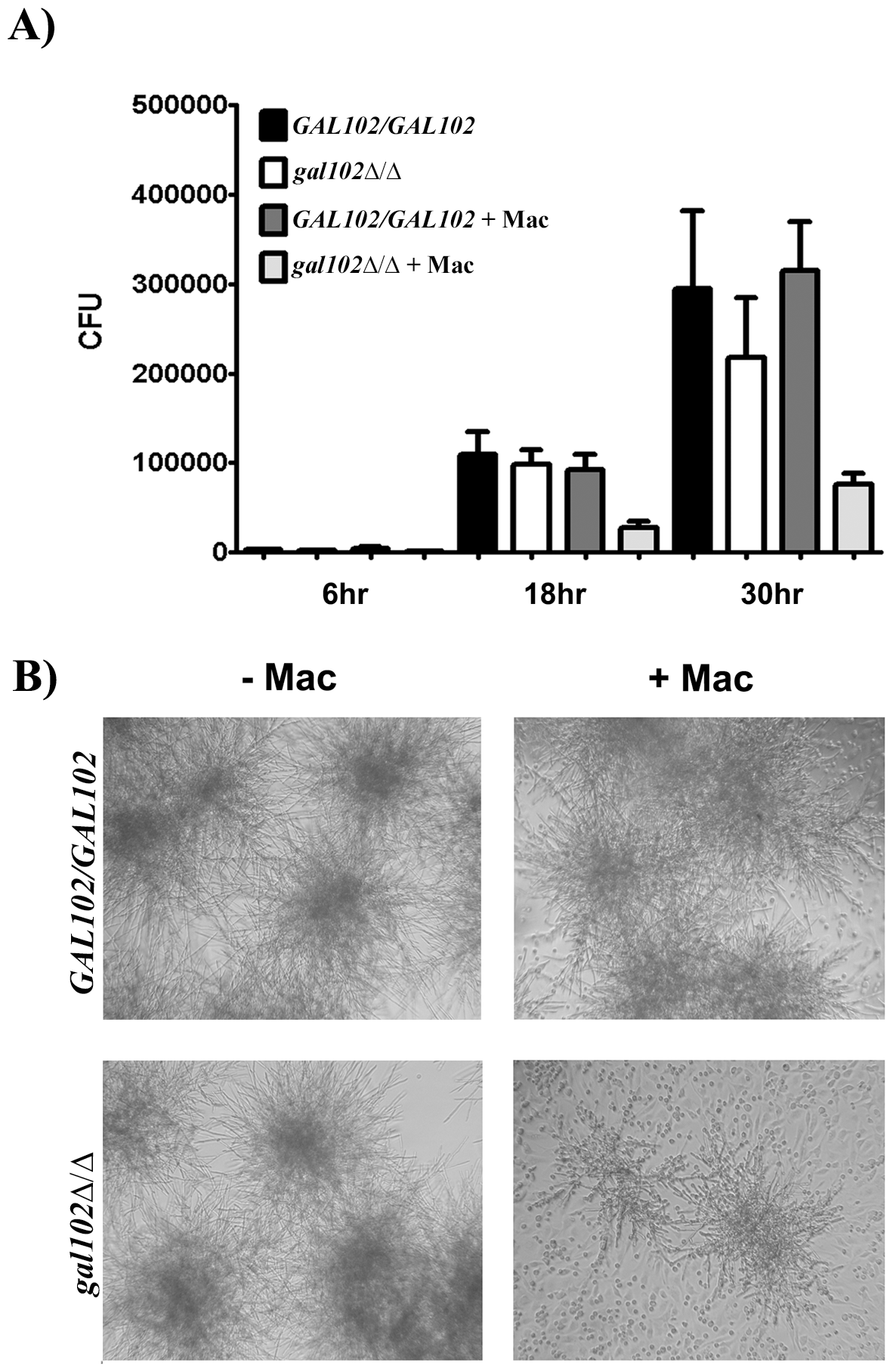 Macrophages suppress the growth of <i>gal102Δ/Δ in vitro.</i>