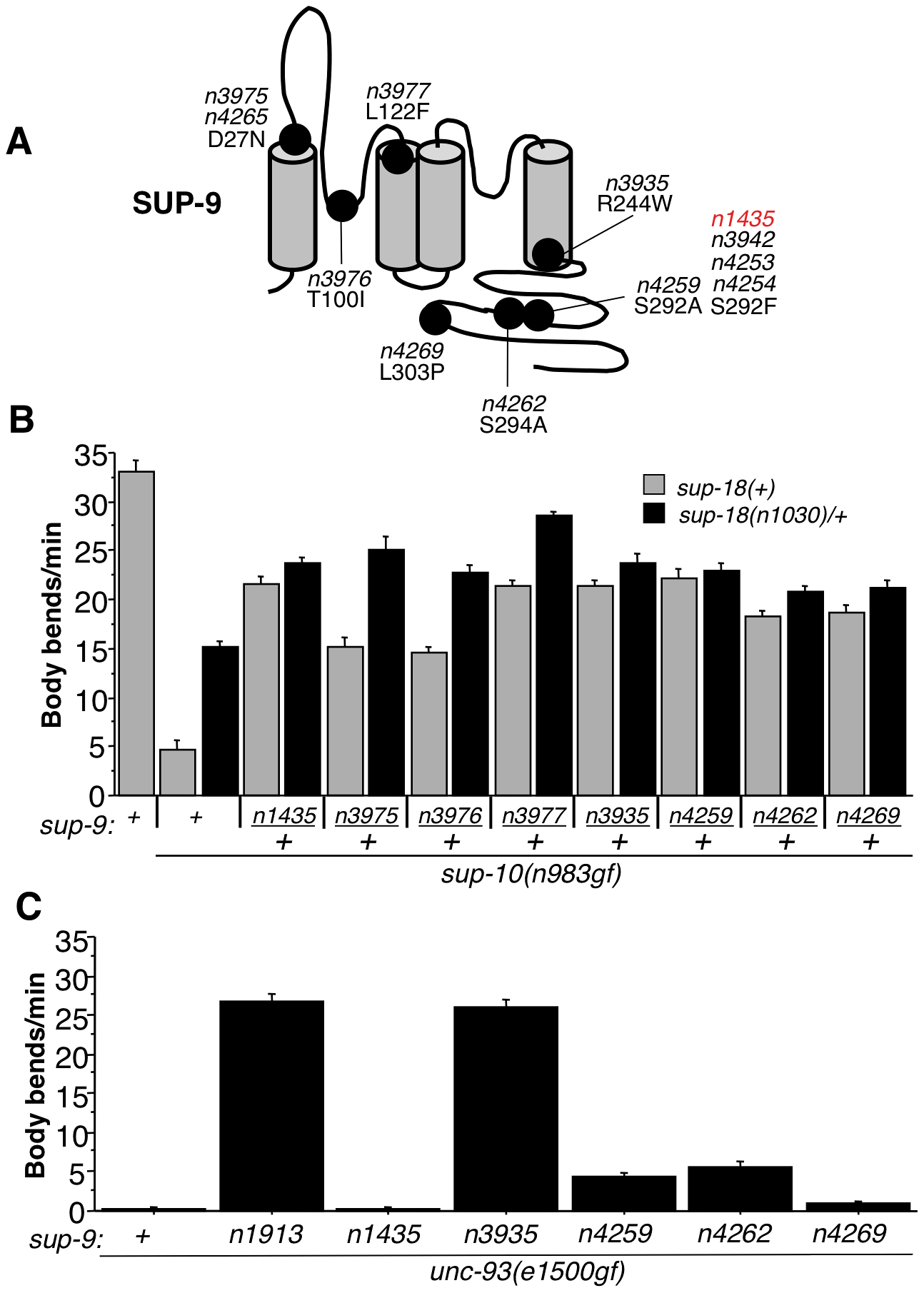 Characterization of novel <i>sup-9</i> alleles.