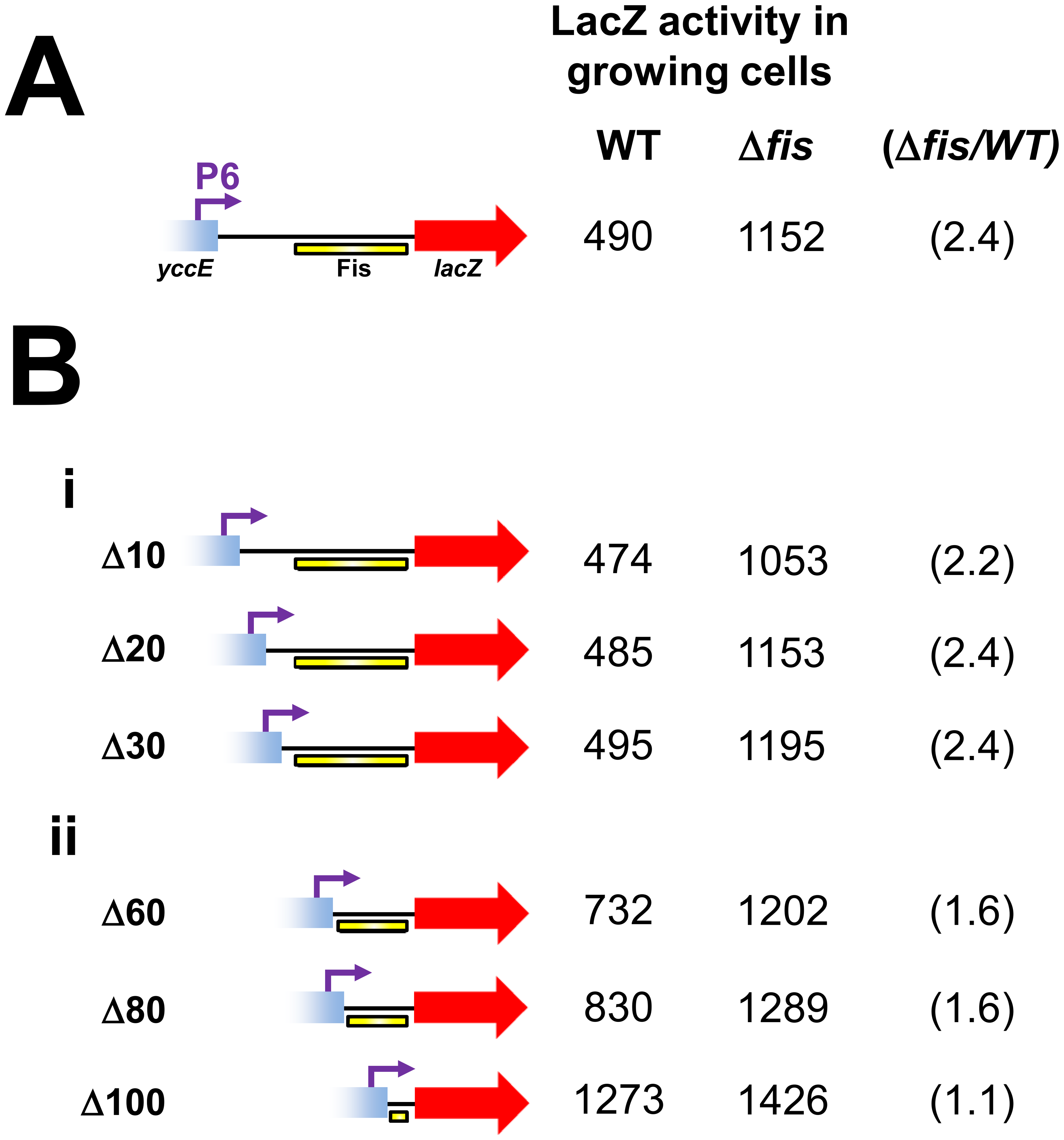 Deletion analysis of the Fis binding region.