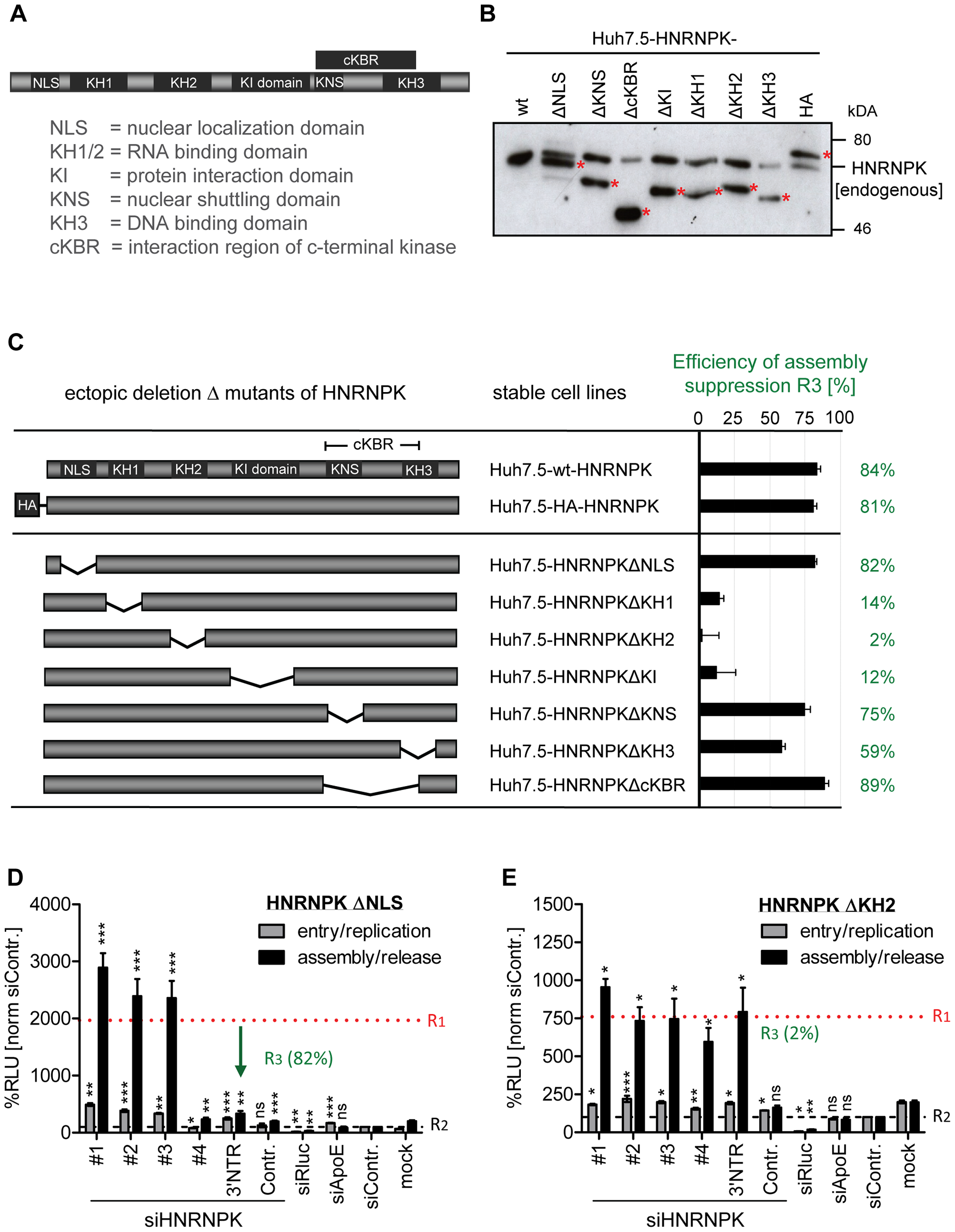 RNA and protein binding domains of HNRNPK are essential for restriction of HCV particle production.