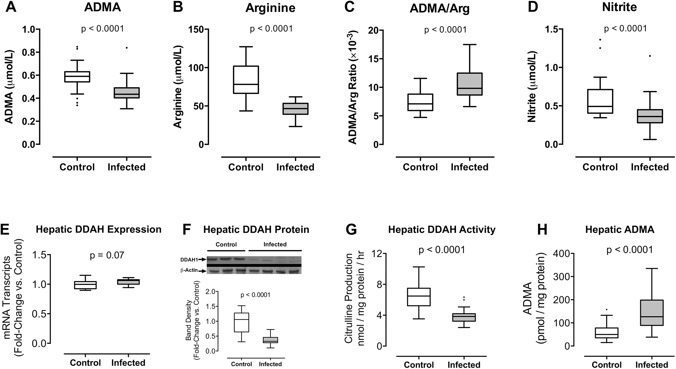 (A-D) <i>Plasmodium berghei</i> ANKA infection increases the plasma ratio of ADMA to arginine in mice.