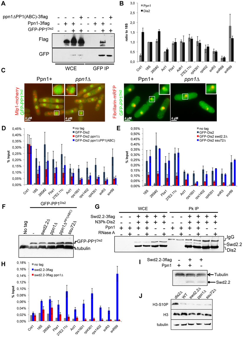 Swd2.2 facilitates the localization of PP1 phosphatase by interacting with the PNUTS homologue Ppn1.