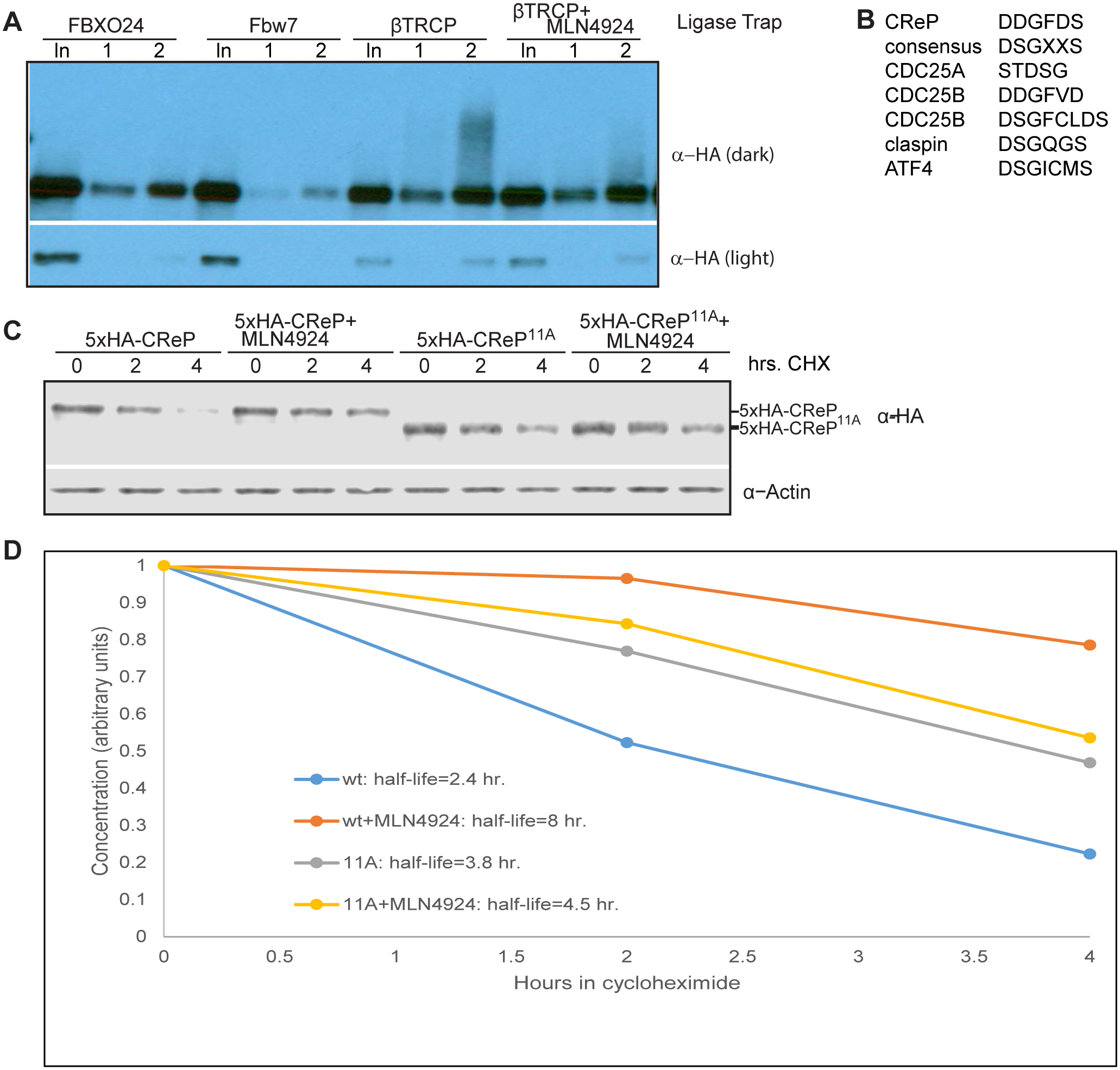 CReP ubiquitination is dependent on CRLs and turnover is regulated by a βTRCP consensus degron.