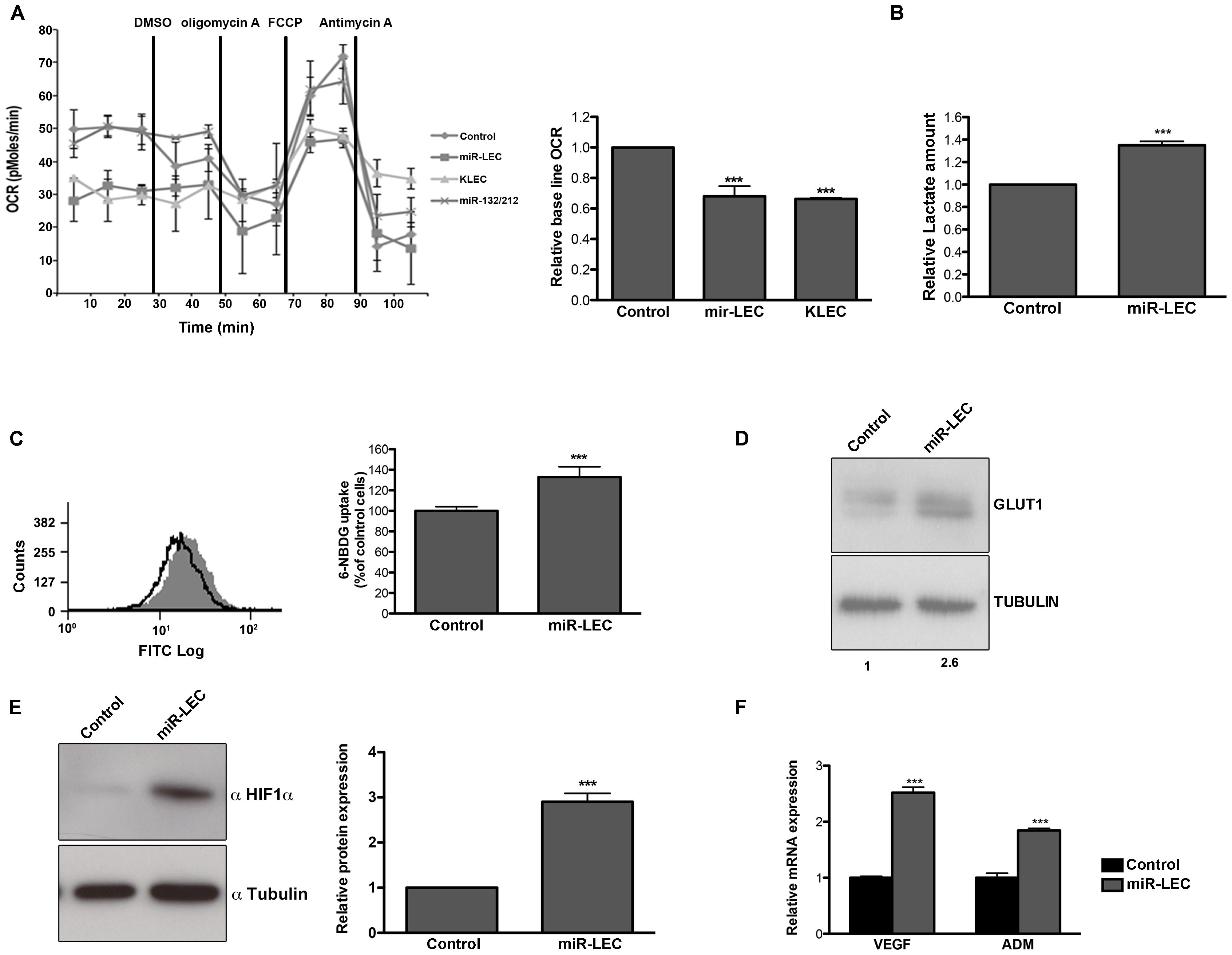 KSHV miRNA cluster induces aerobic glycolysis and stabilizes HIF 1 alpha.