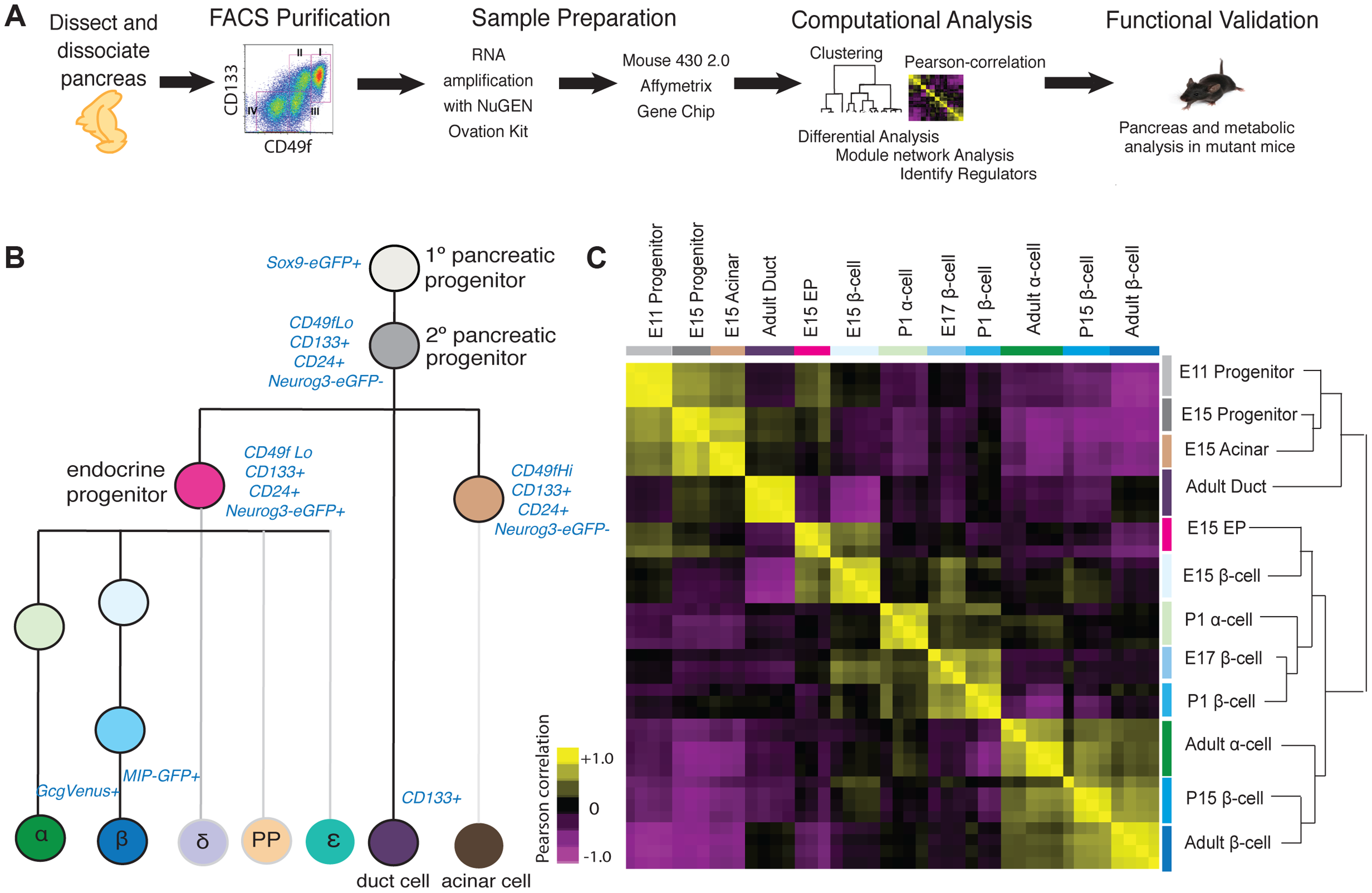 Acquisition and analysis of global gene-expression.