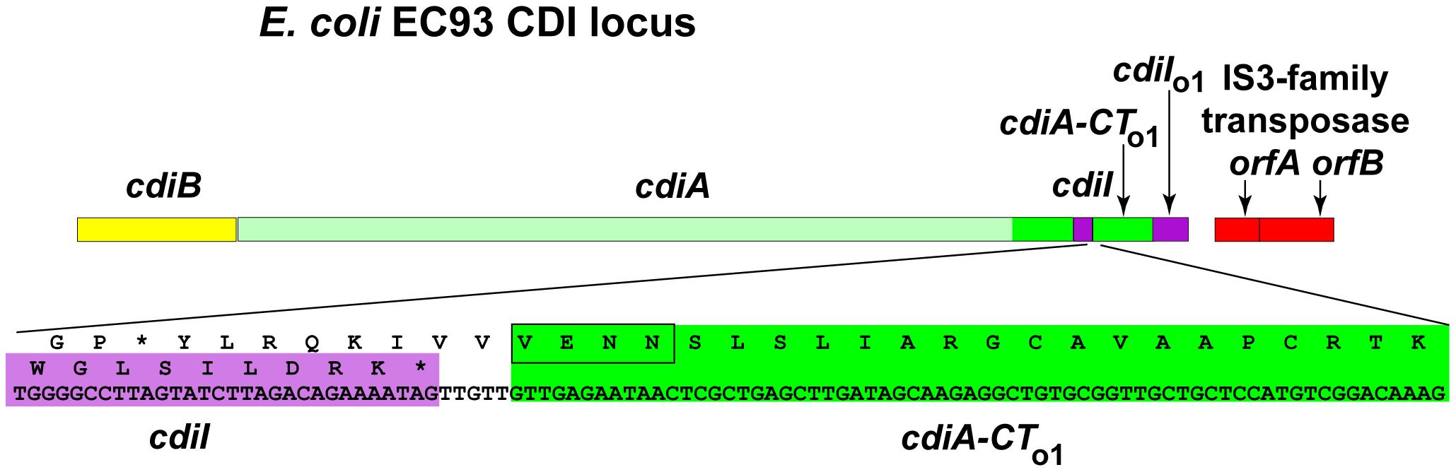 <i>E. coli</i> EC93 contains an orphan <i>cdiA-CT/cdiI</i> module.