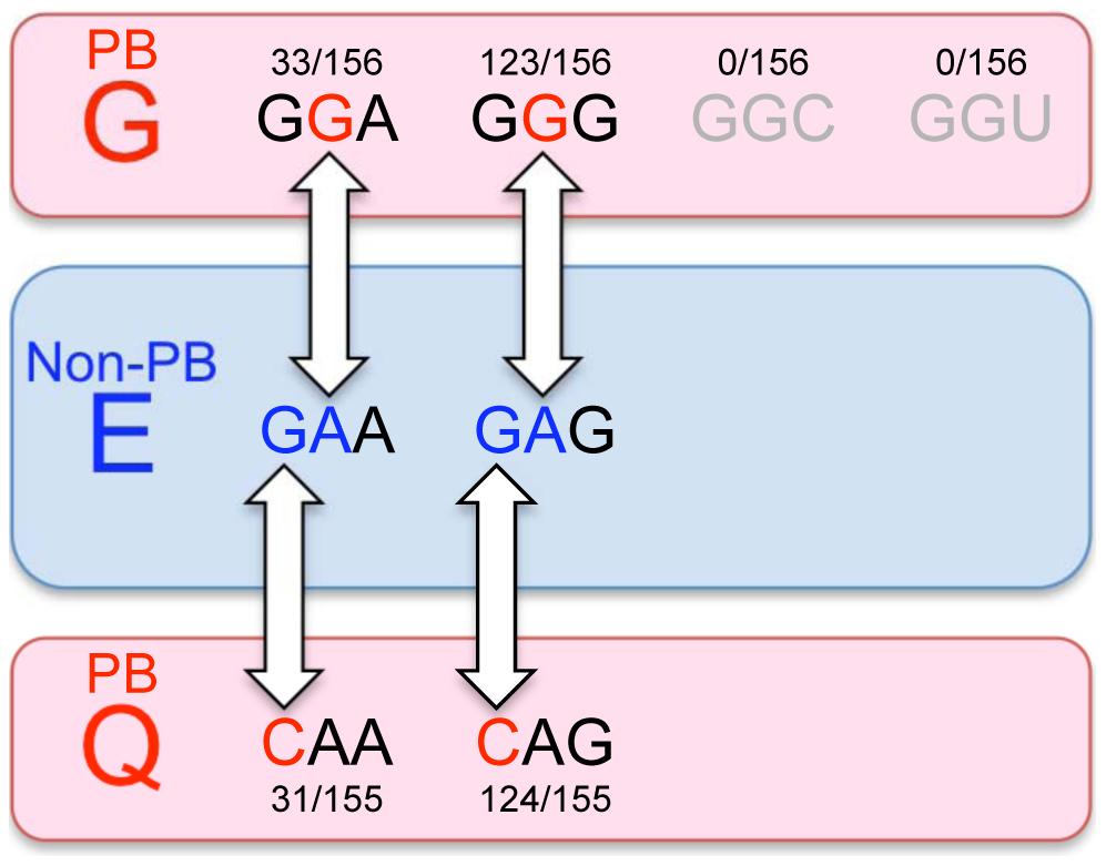 The evolution of EV71-PB and EV71-non-PB