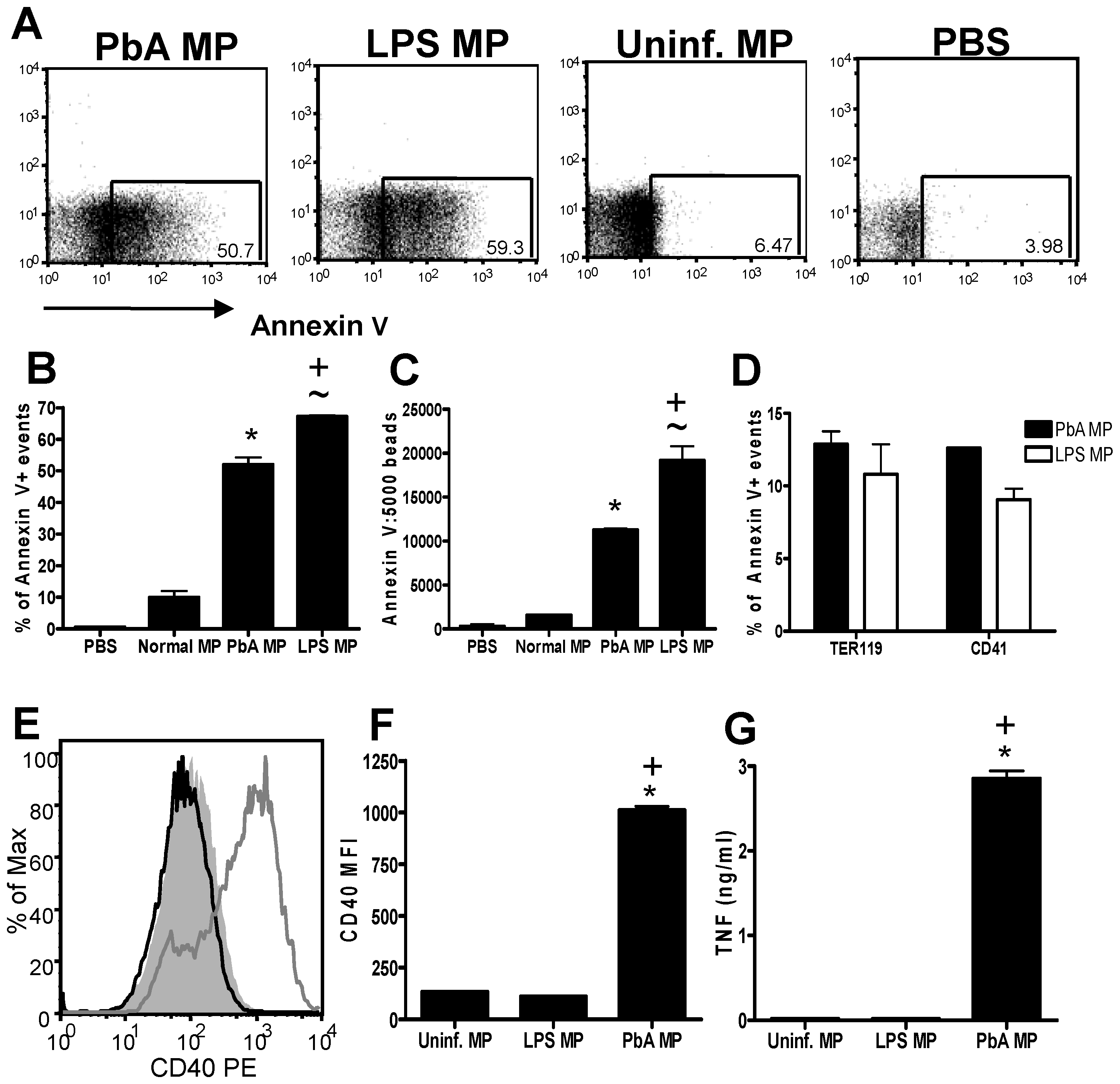 LPS-inflammation induced MPs do not activate macrophages.