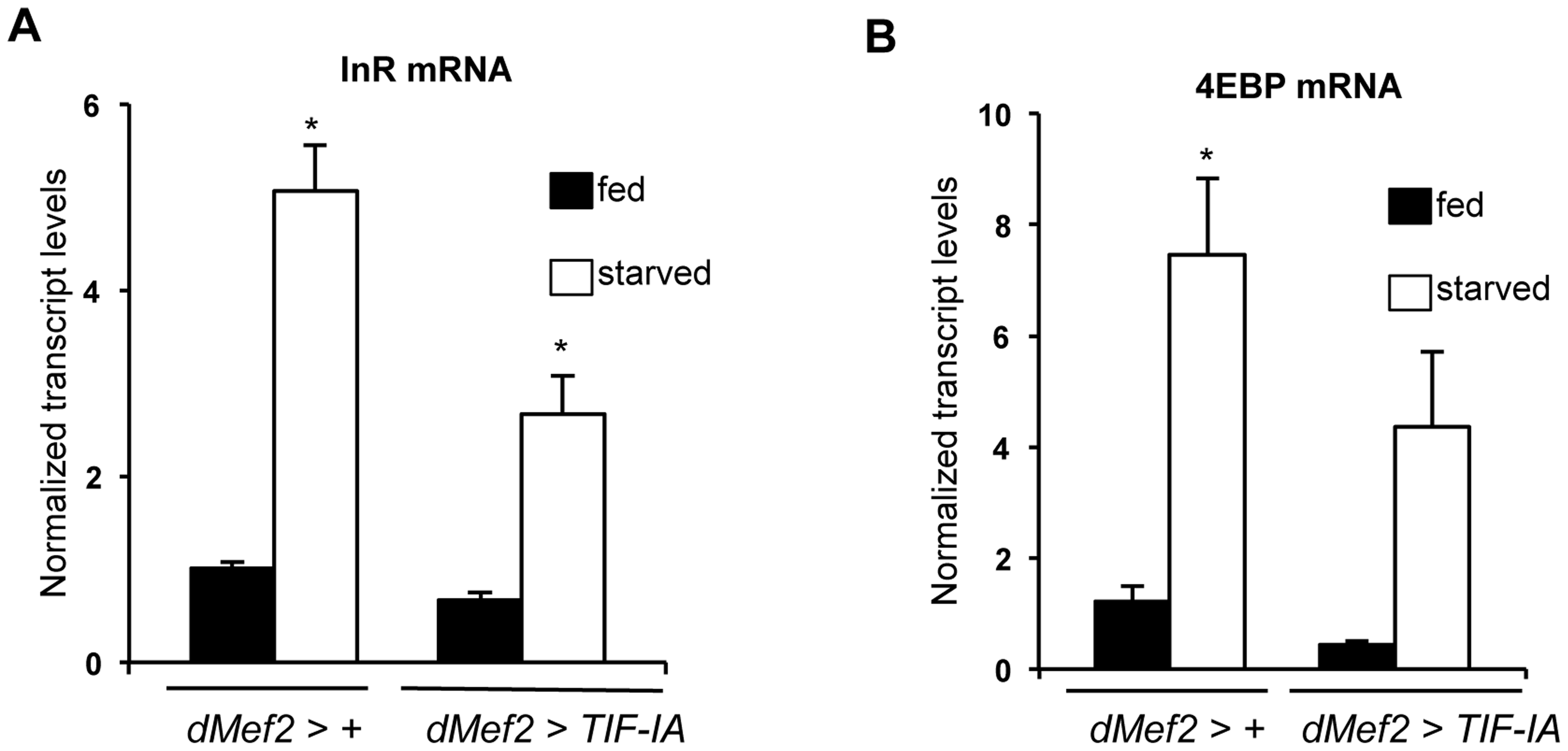 TIF-IA overexpression in muscle can partially reverse the effects of starvation on FOXO-dependent genes.