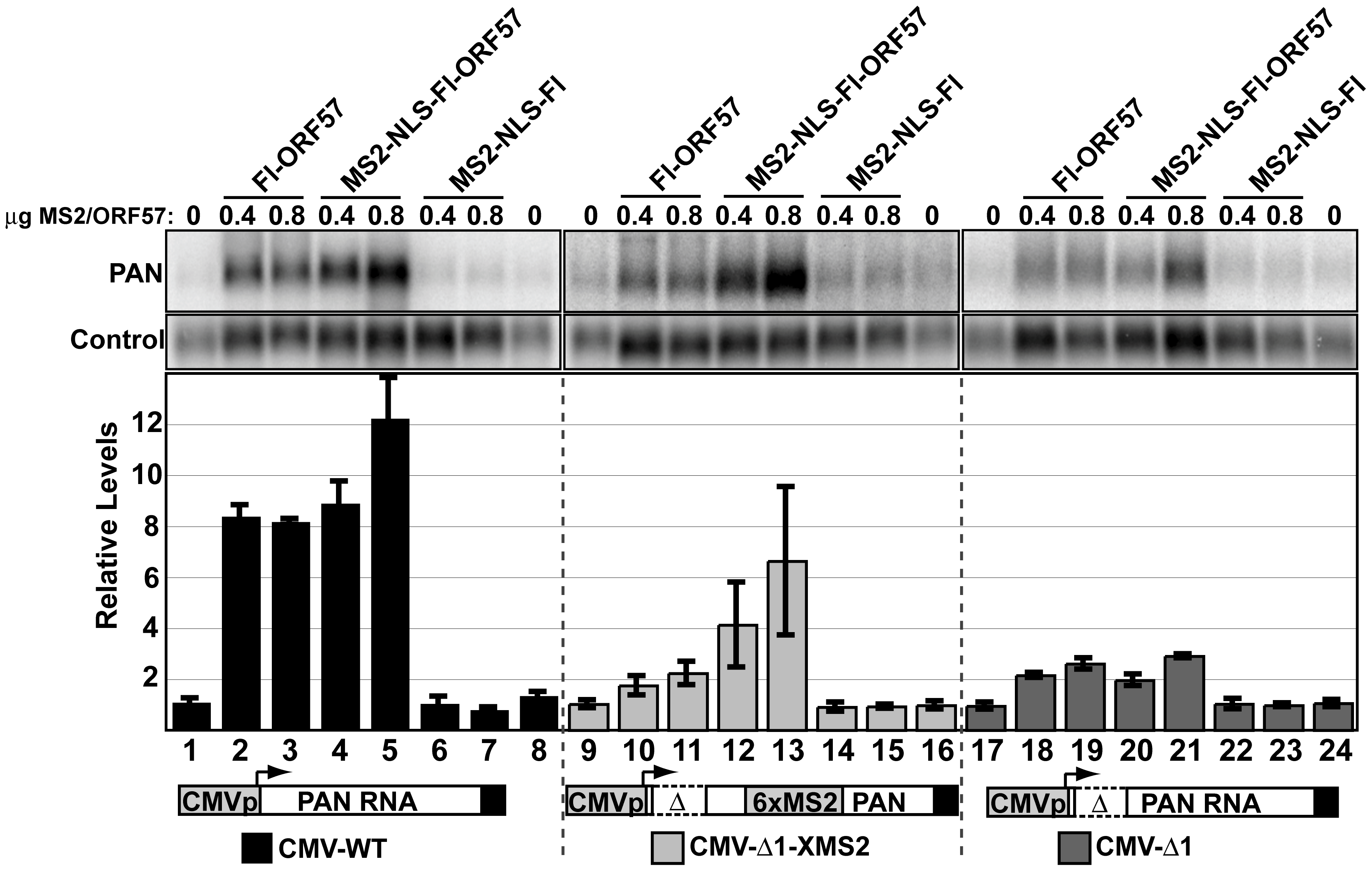 Tethering of ORF57 to CMV-Δ1 restores ORF57-responsiveness.
