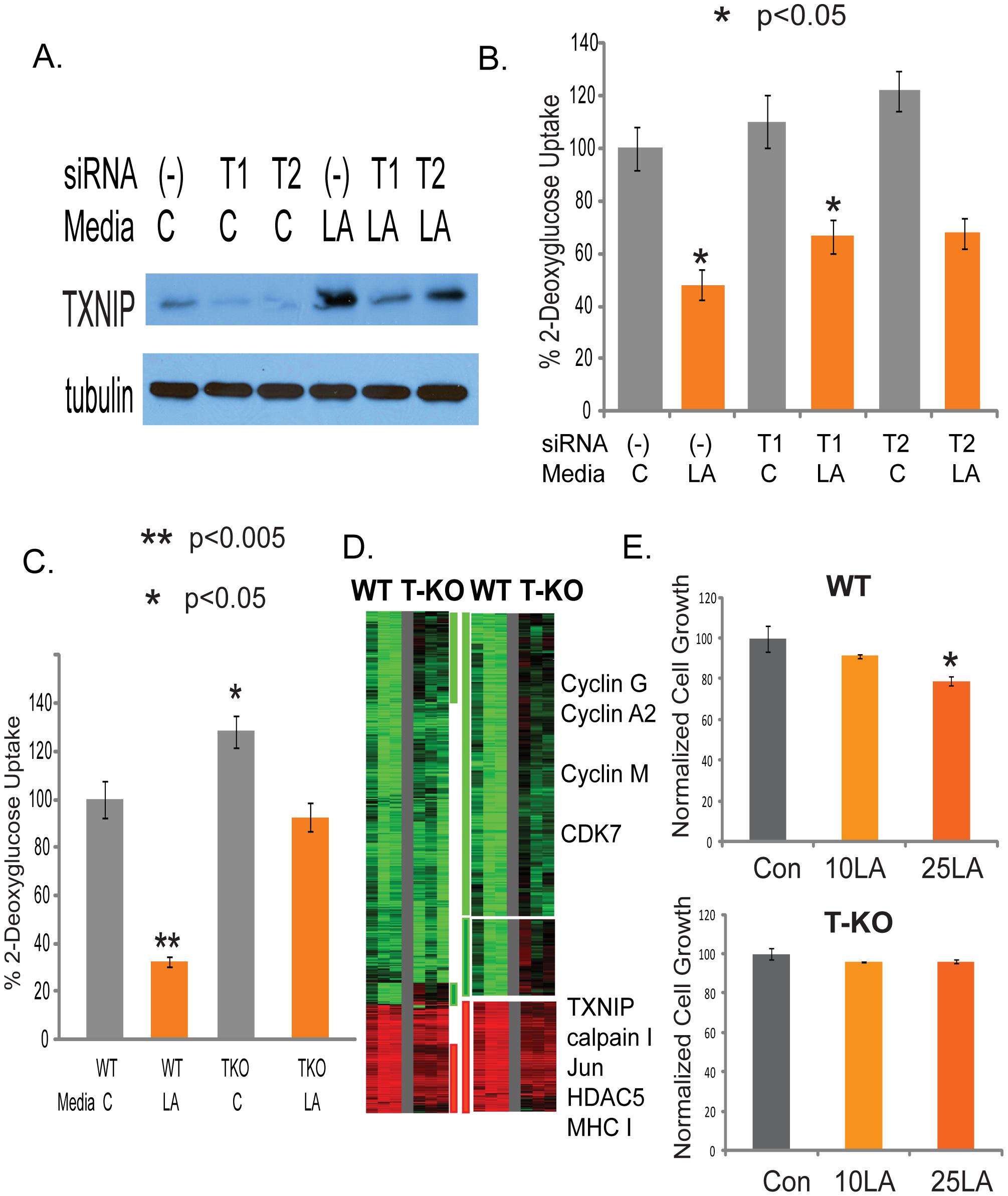 Identification of TXNIP as a regulator of lactic acidosis response.
