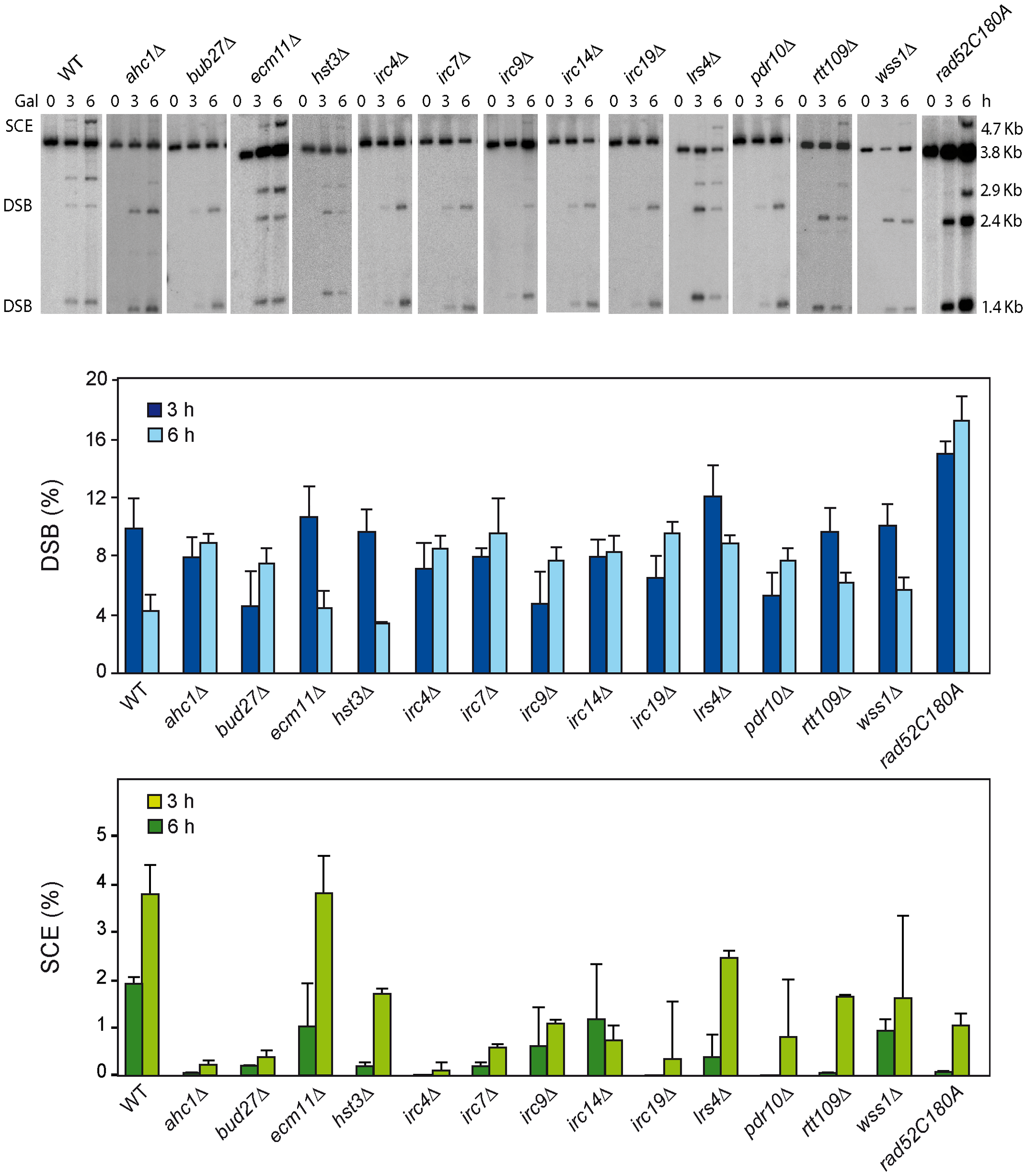 Molecular analysis of SCR in 13 SCR–defective mutants.