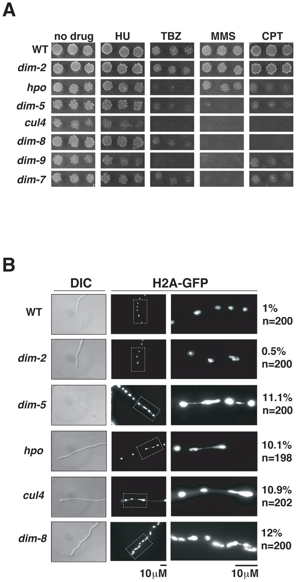 Heterochromatin is required for normal chromosome segregation.