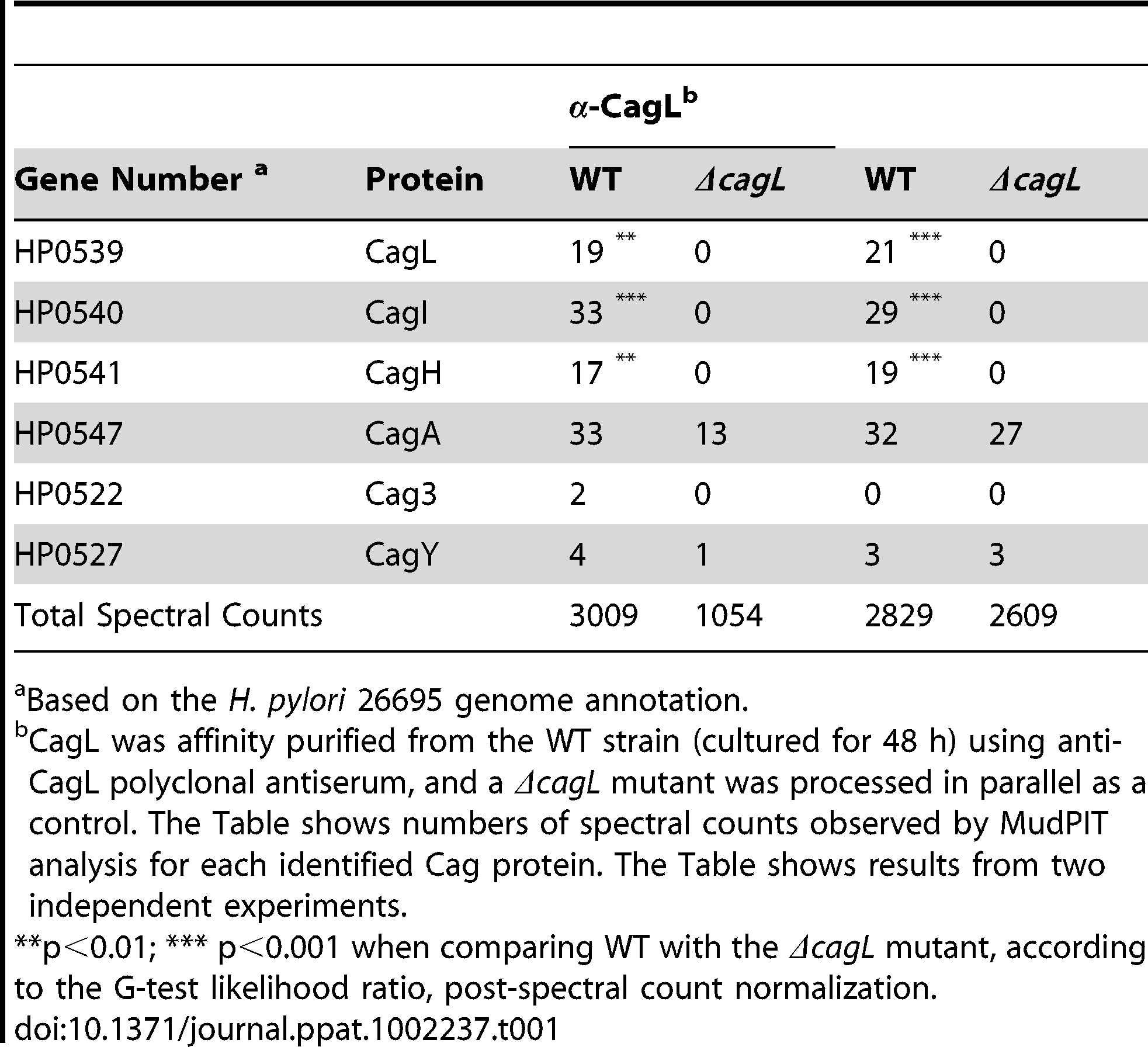 Cag proteins that co-purify with CagL.